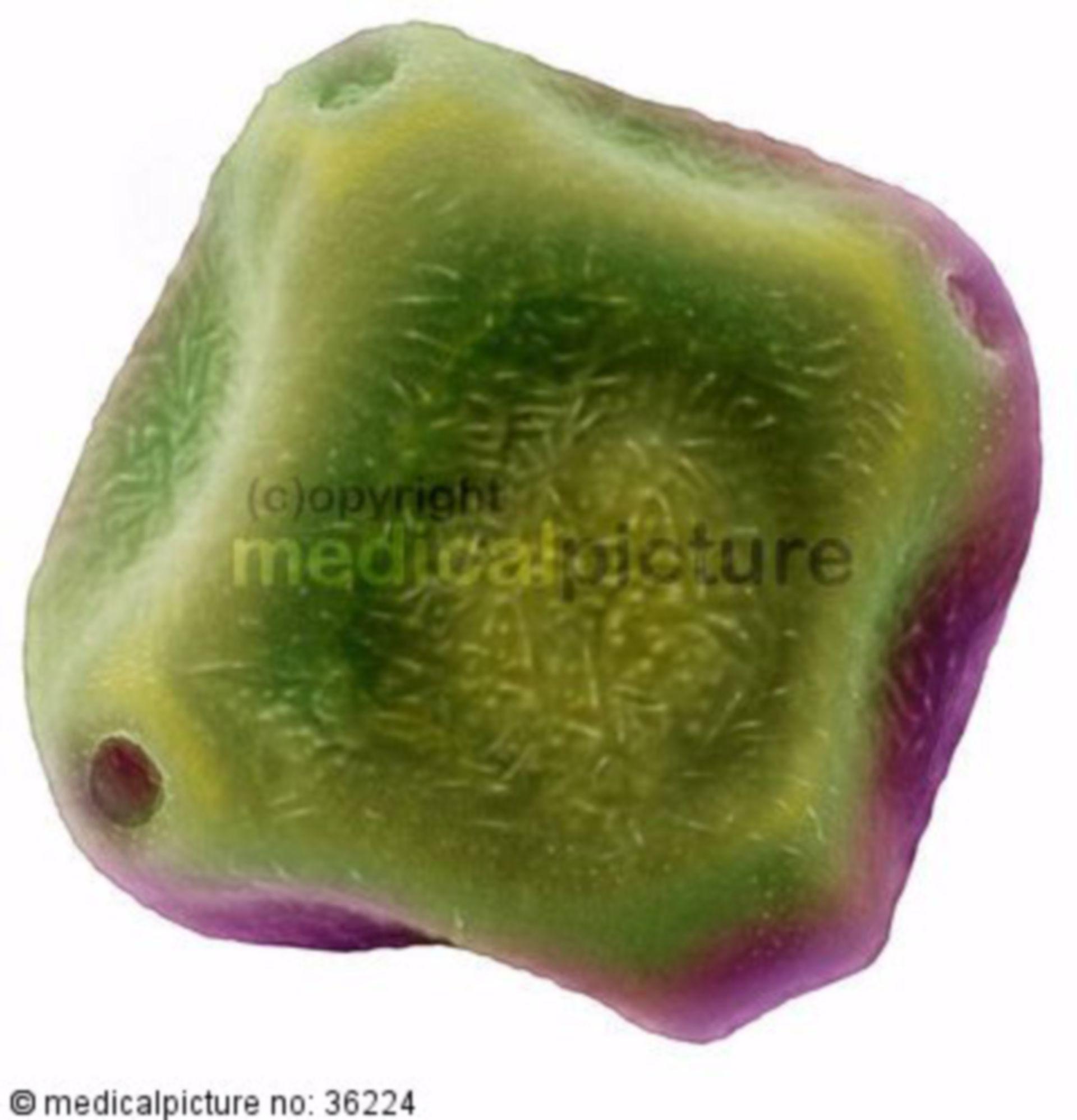 Erlen Polle, pollen of alder