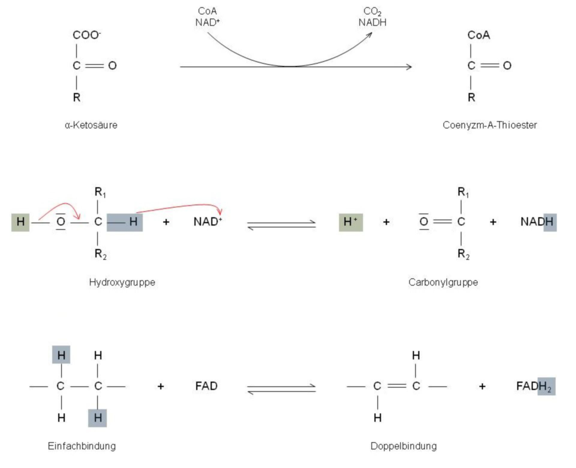 Reacciones de deshidrogenasas en el metabolismo