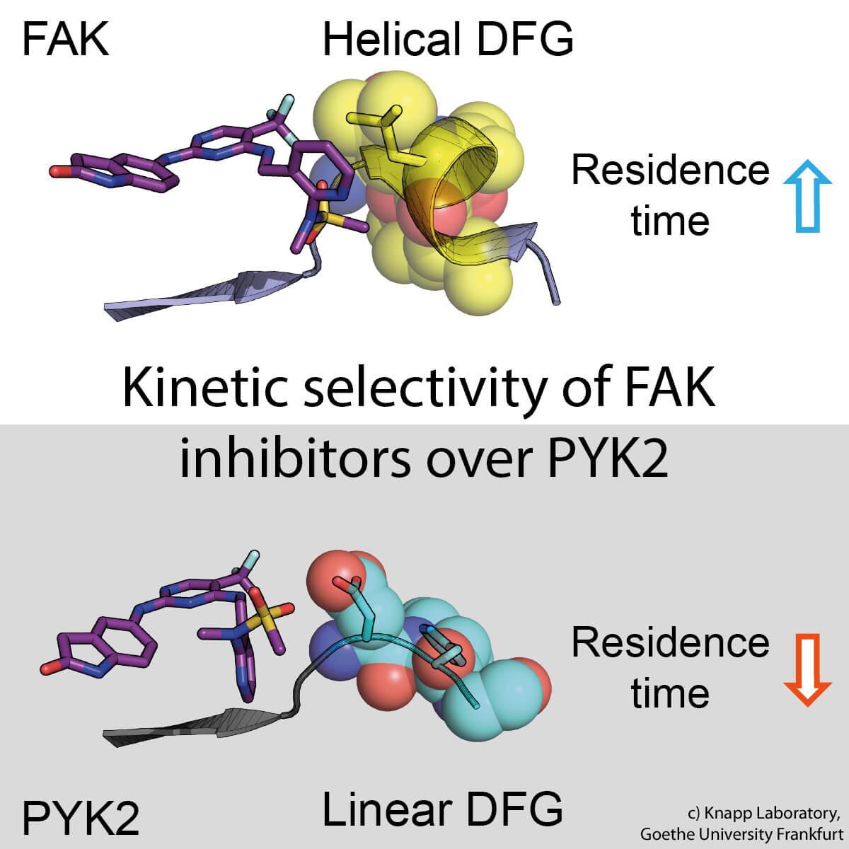 fak_pyk2_inhibitor_withtext_original.jpg