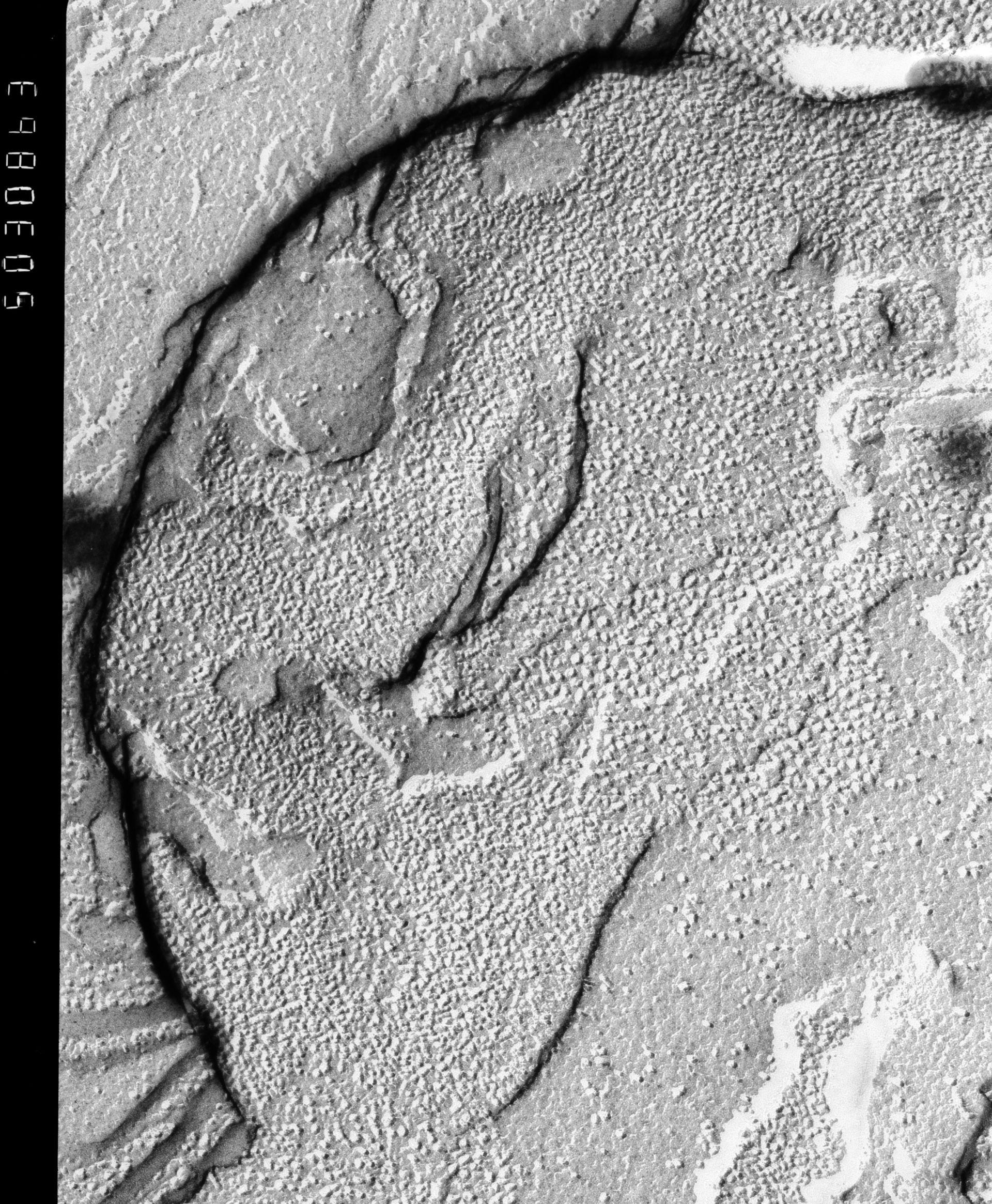 Prochloron (Thylakoid) - CIL:13995