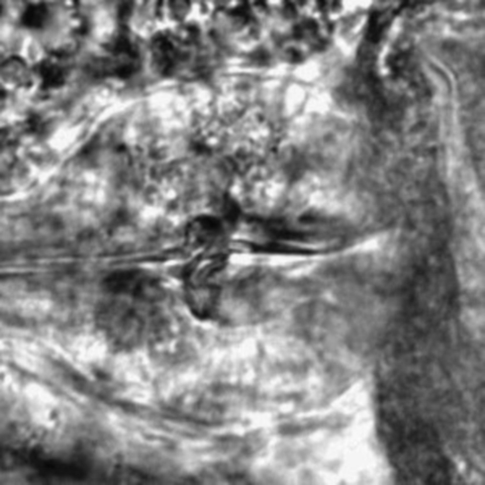 Caenorhabditis elegans - CIL:2297