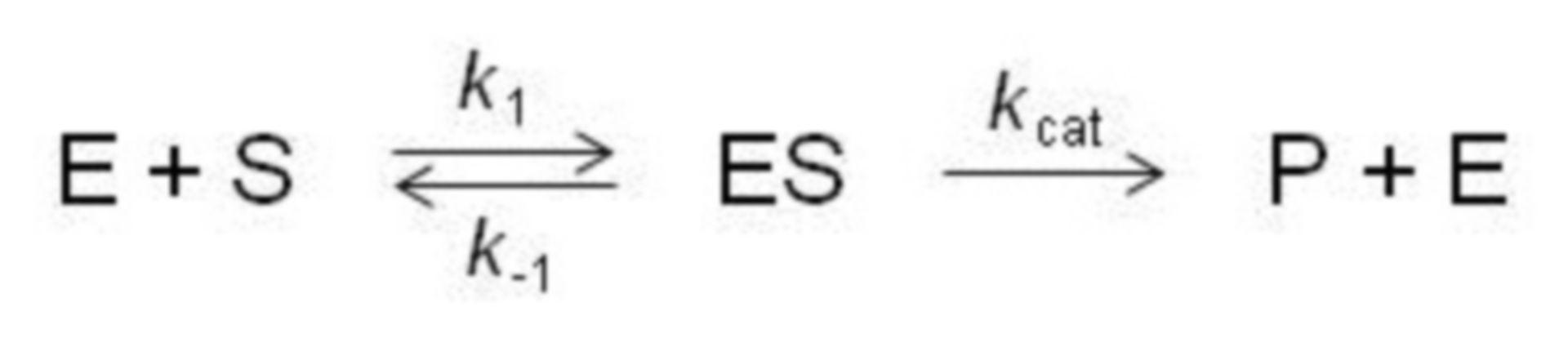 Michaelis-Menton equation