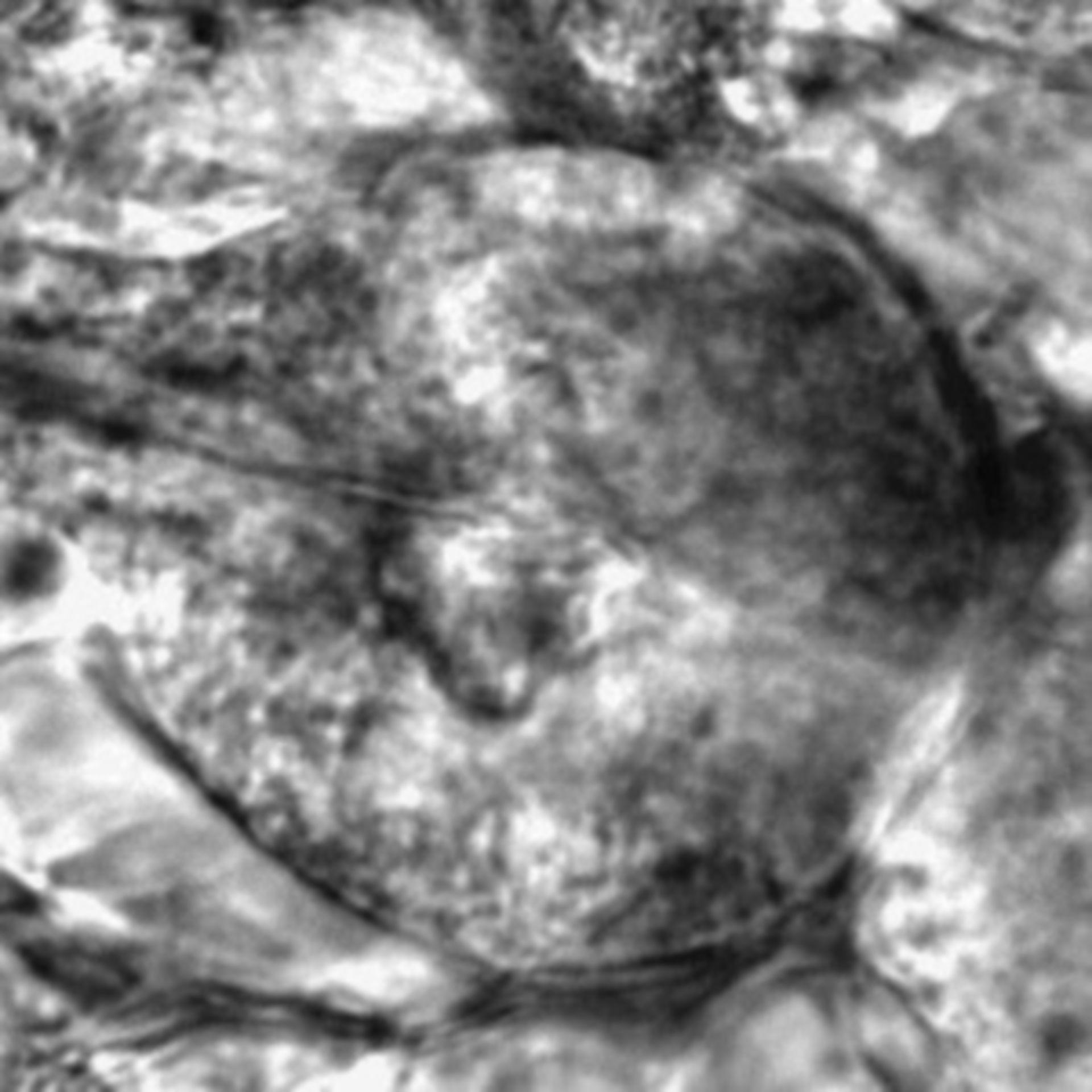 Caenorhabditis elegans - CIL:2768