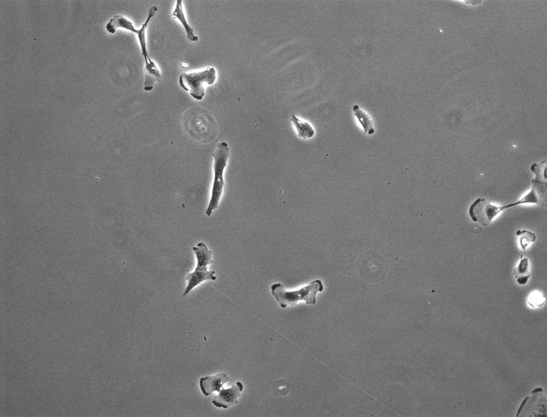 Homo sapiens (Retinal pigment epithelium) - CIL:27831