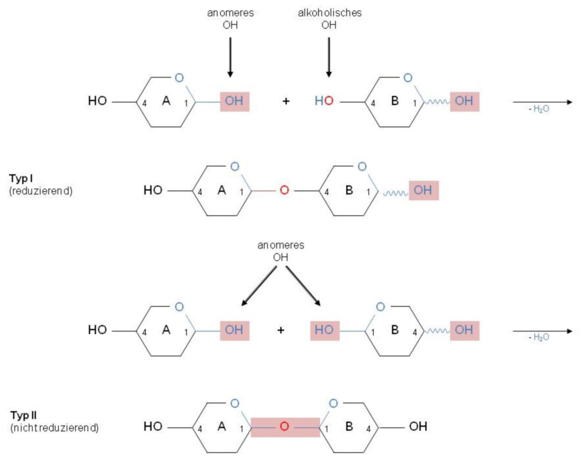 Disaccharid-Verknüpfung