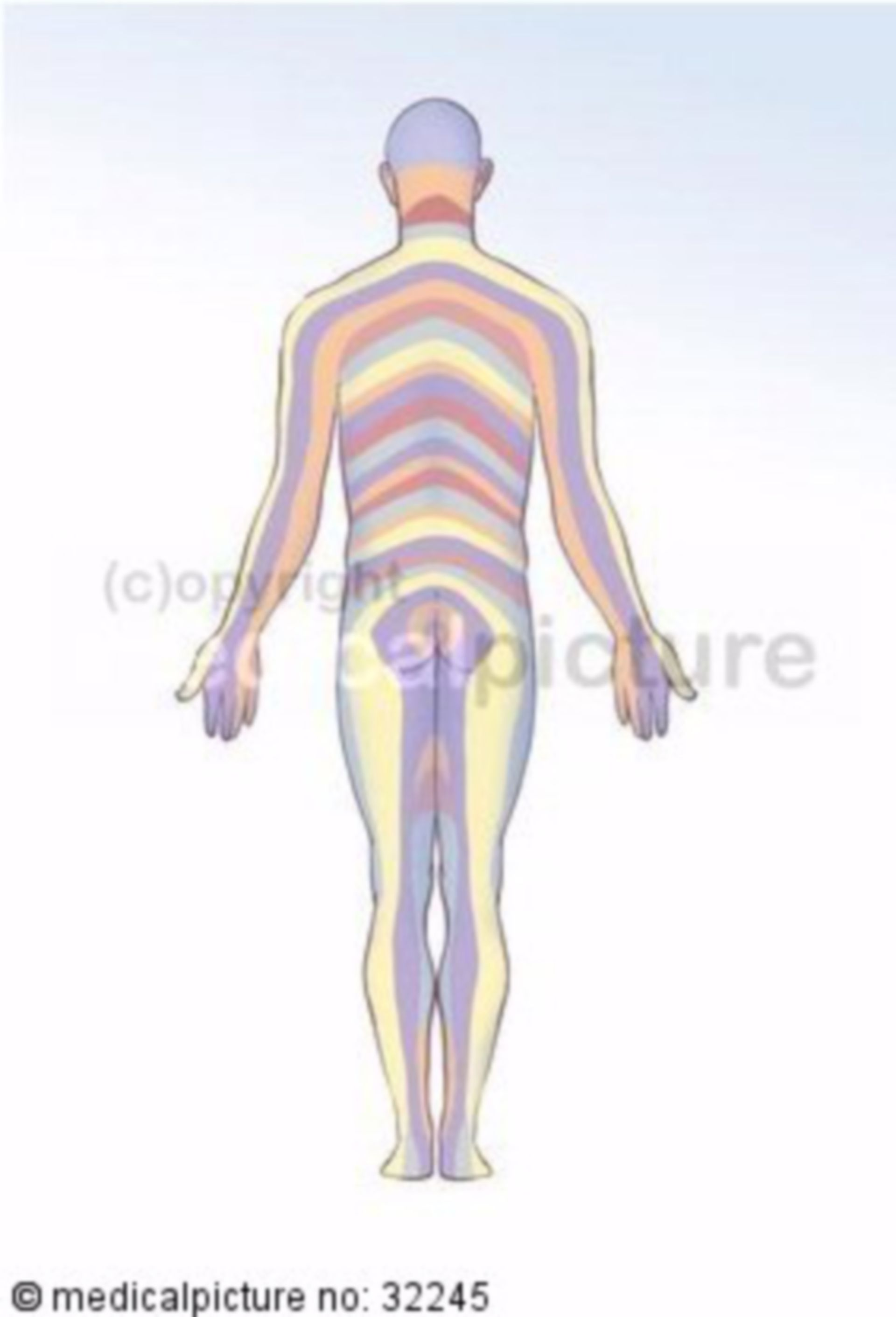 Dermatomes, Sensitive Areas of Innervation of Different Spinal Nerves