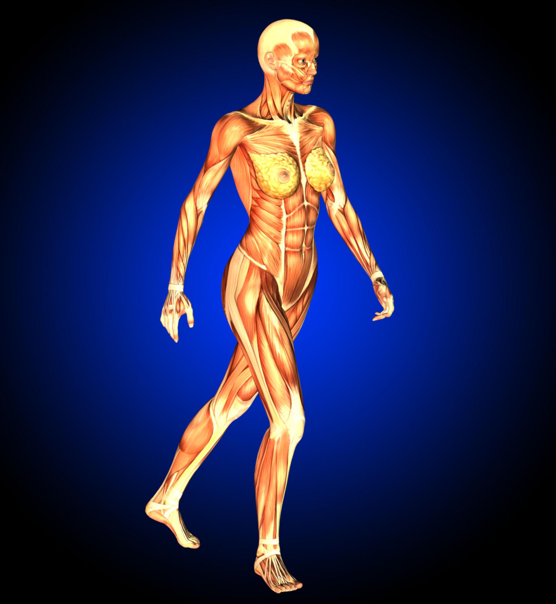 Muscolatura di una donna che cammina