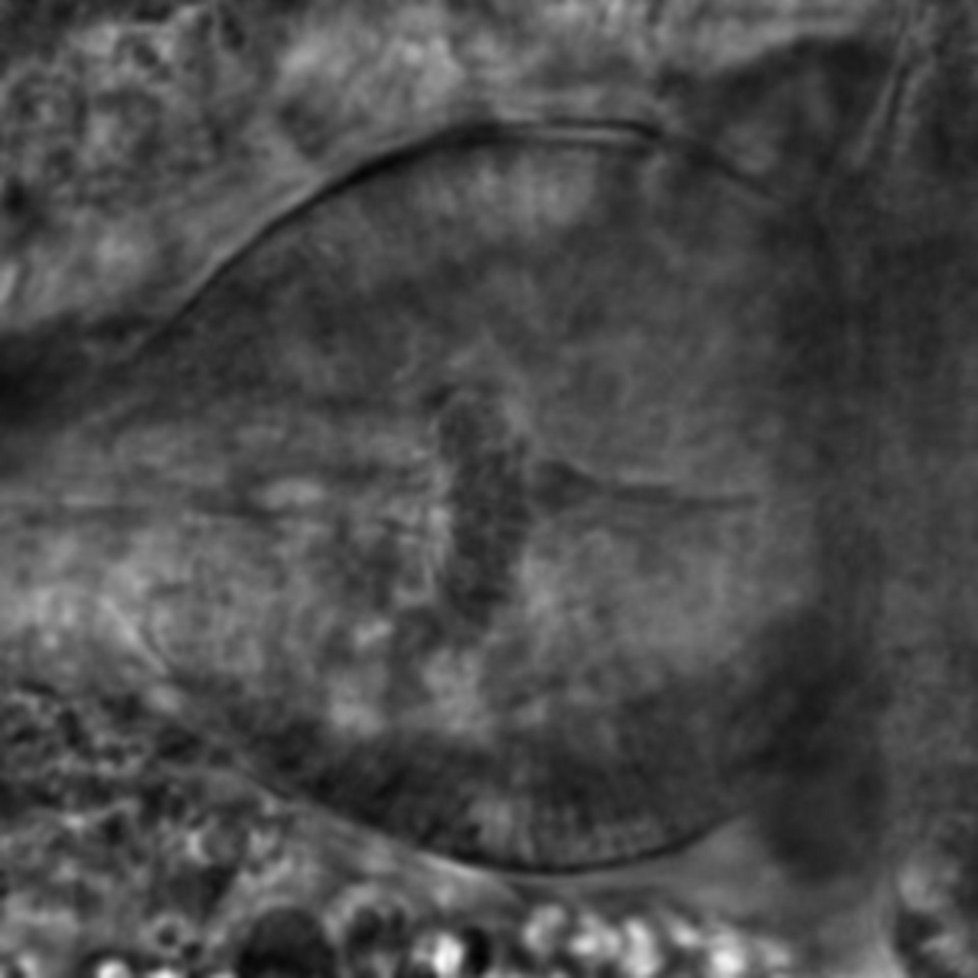 Caenorhabditis elegans - CIL:2147