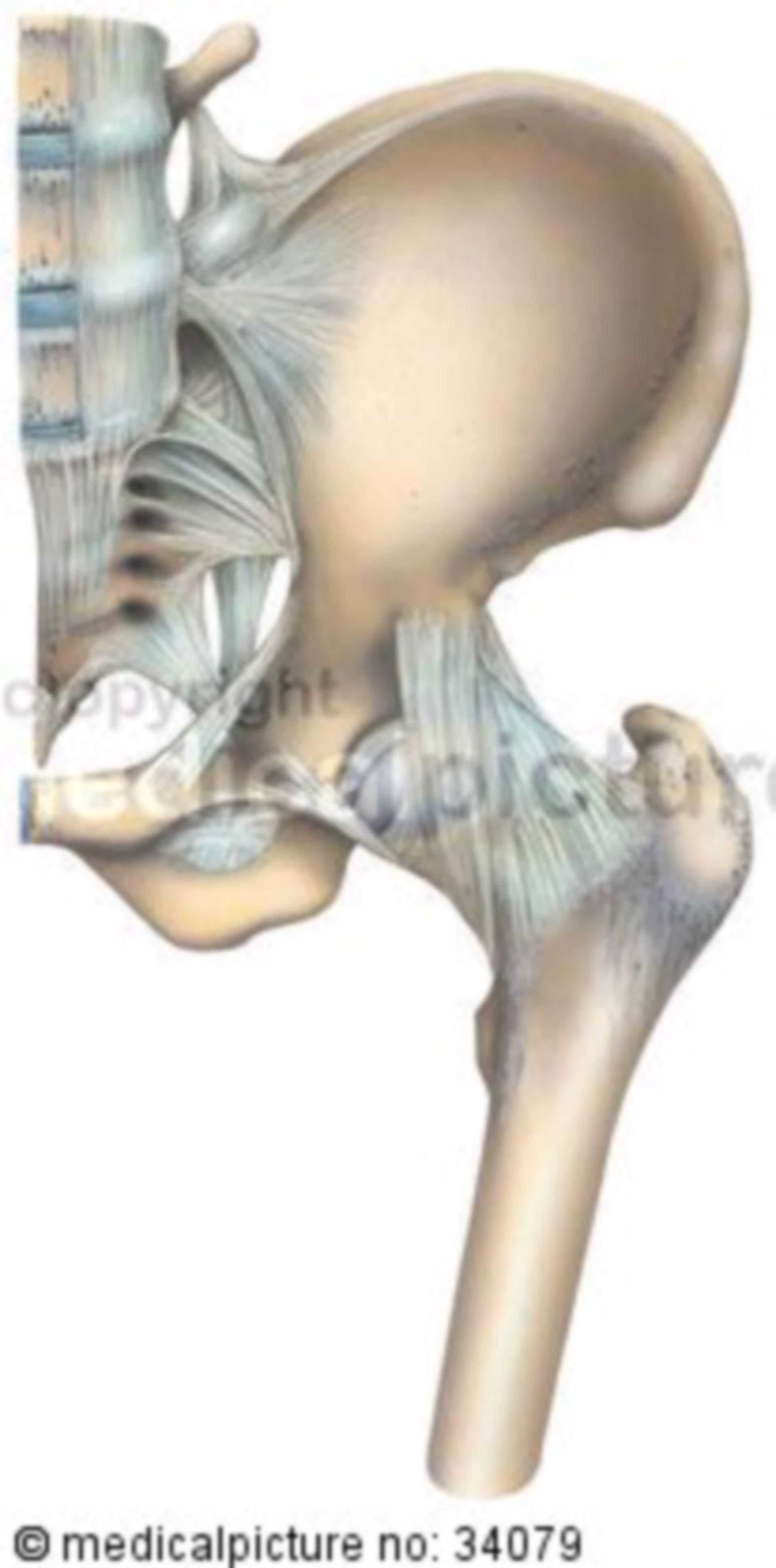Ossa del bacino