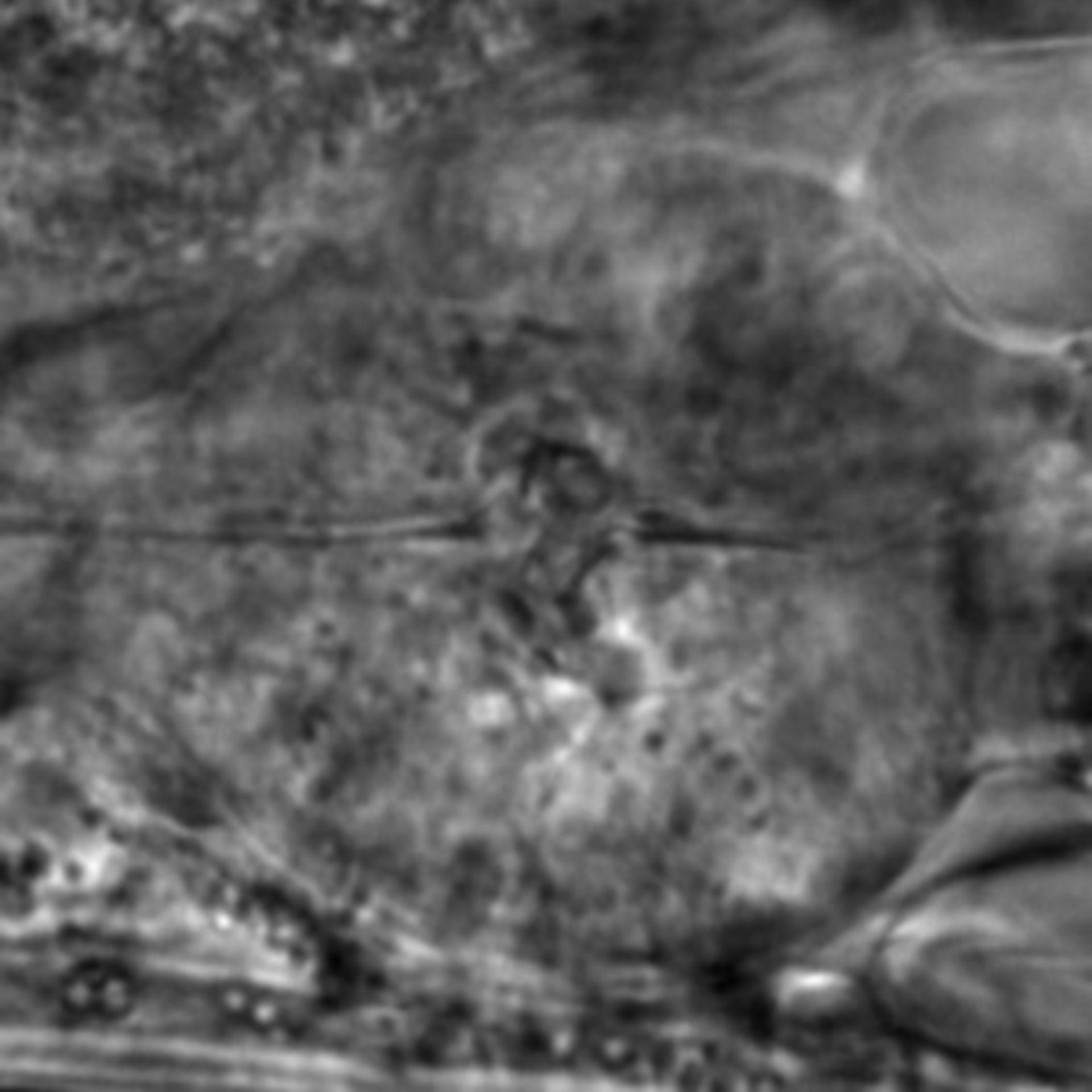 Caenorhabditis elegans - CIL:1912