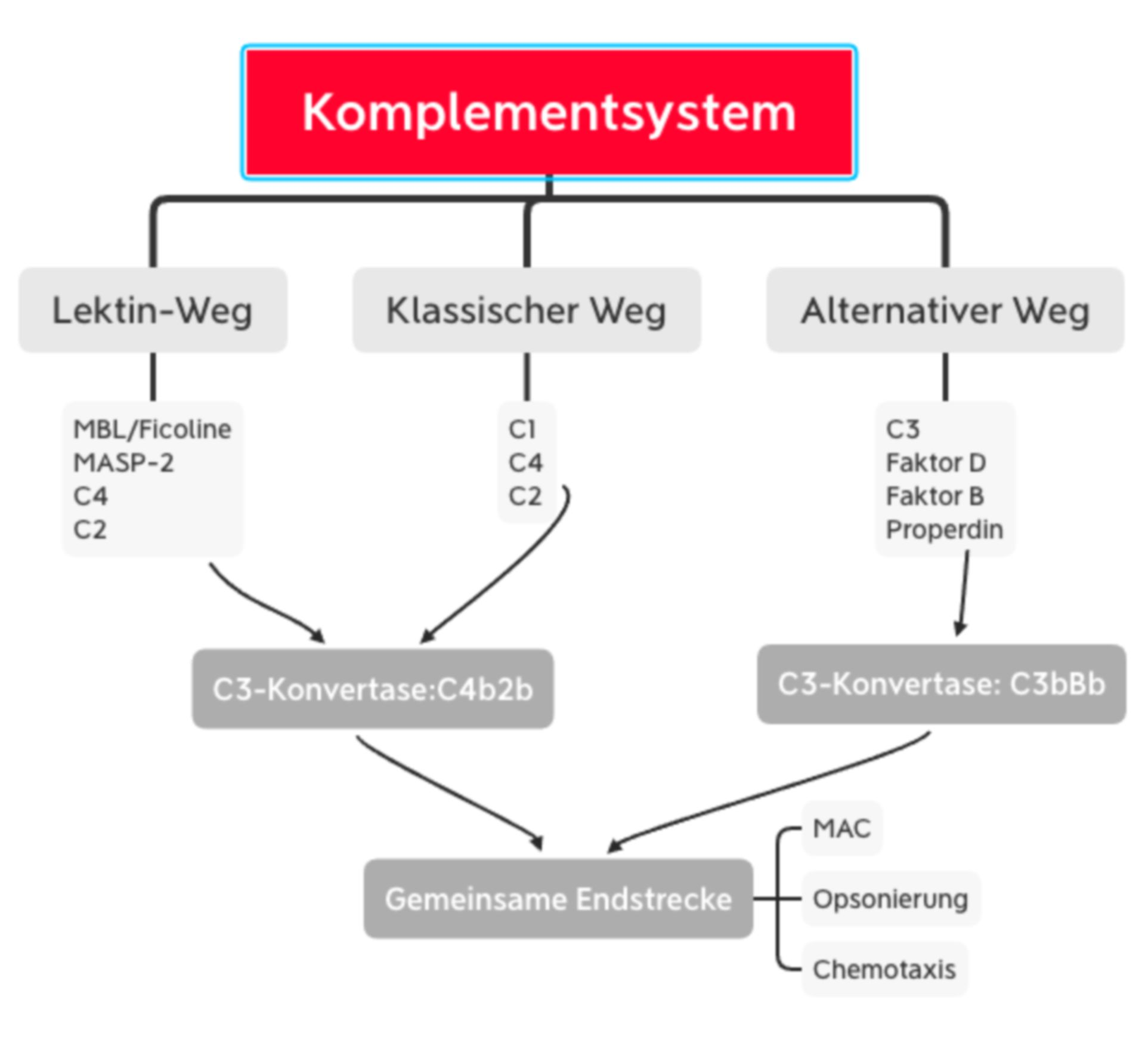 Komplementsystem - Übersicht