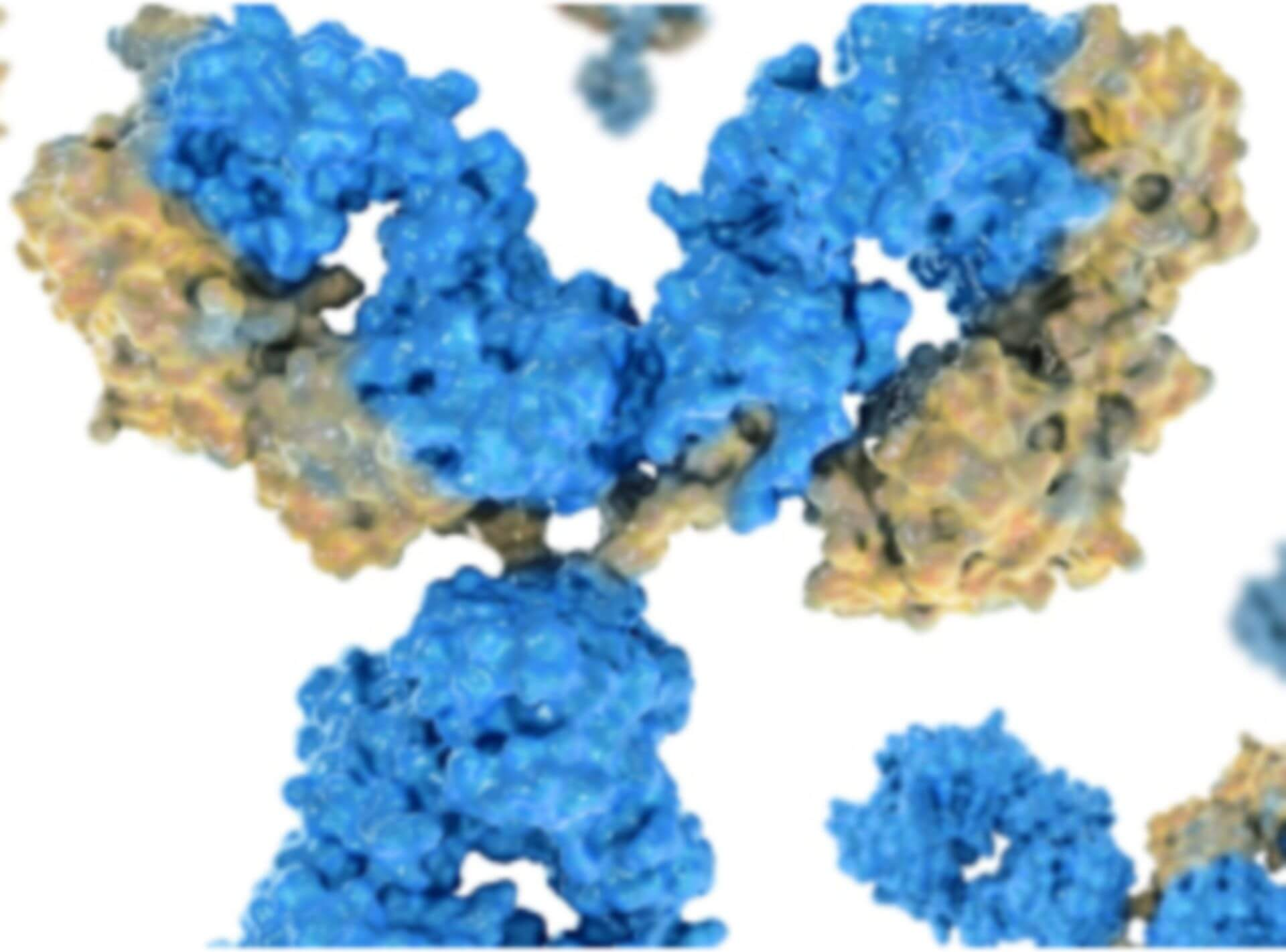 Epigenetics Antibody Products