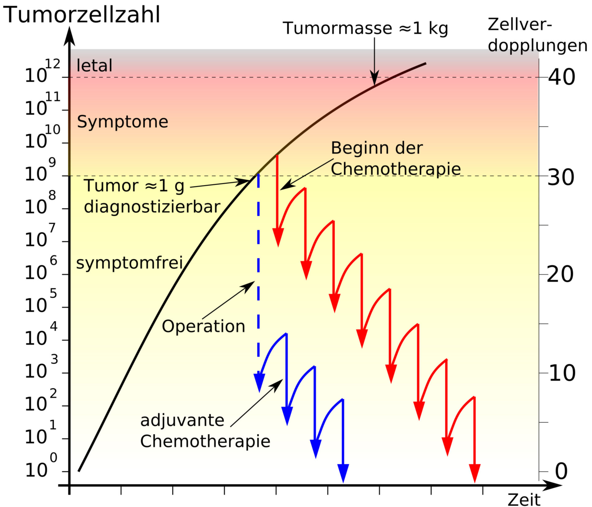 Fractional cell kill during chemotherapy (idealized progression=
