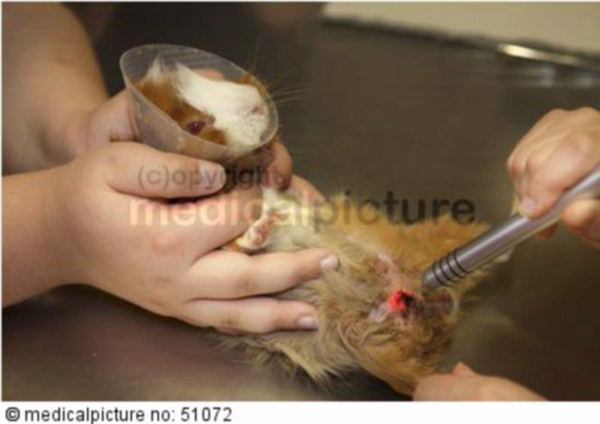 Tierarztpraxis Lasereinsatz