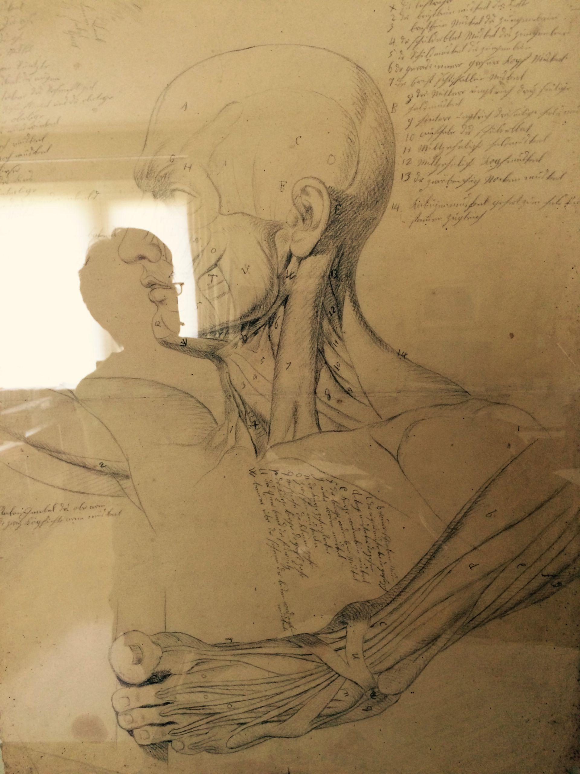 Anatomie im Spiegel