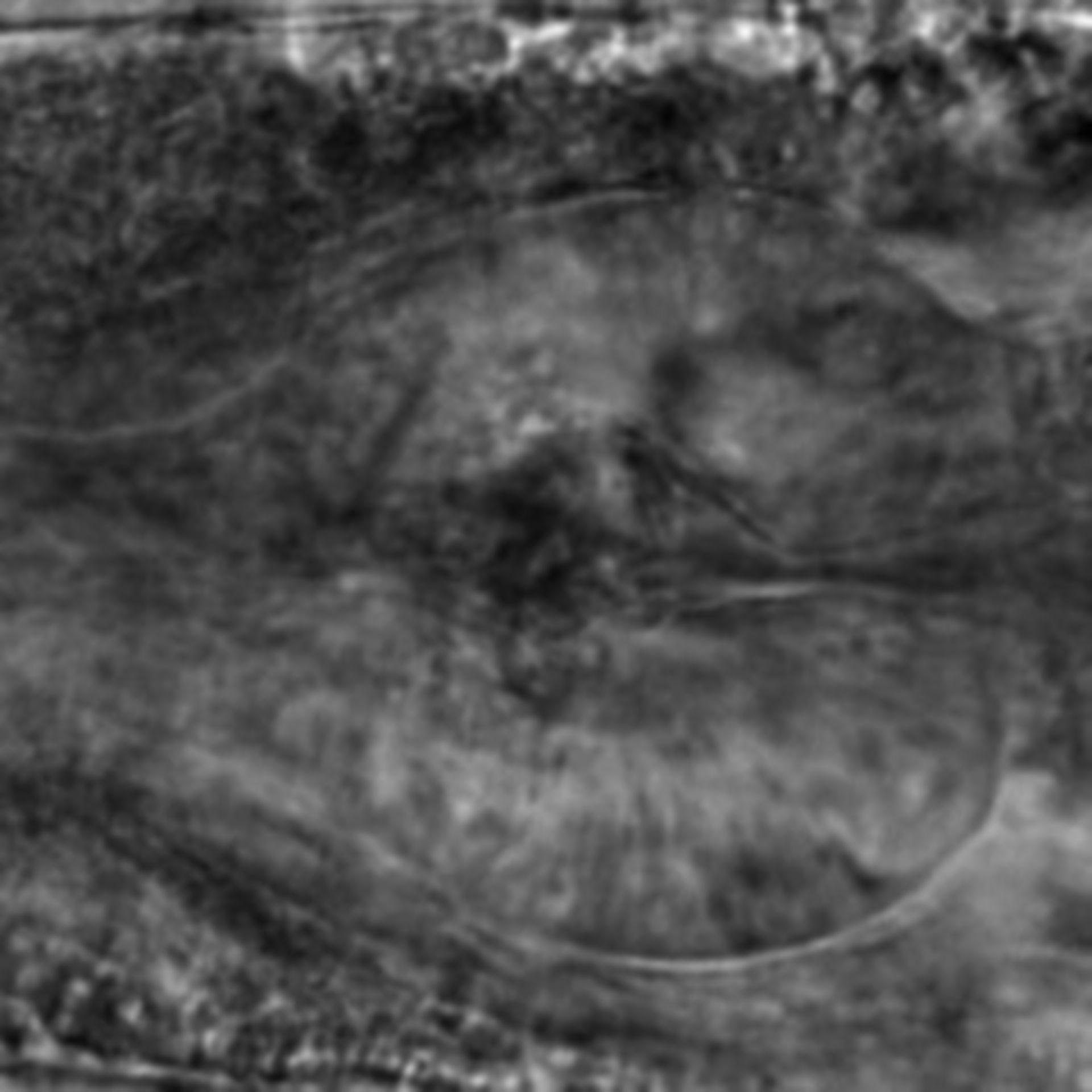 Caenorhabditis elegans - CIL:2813