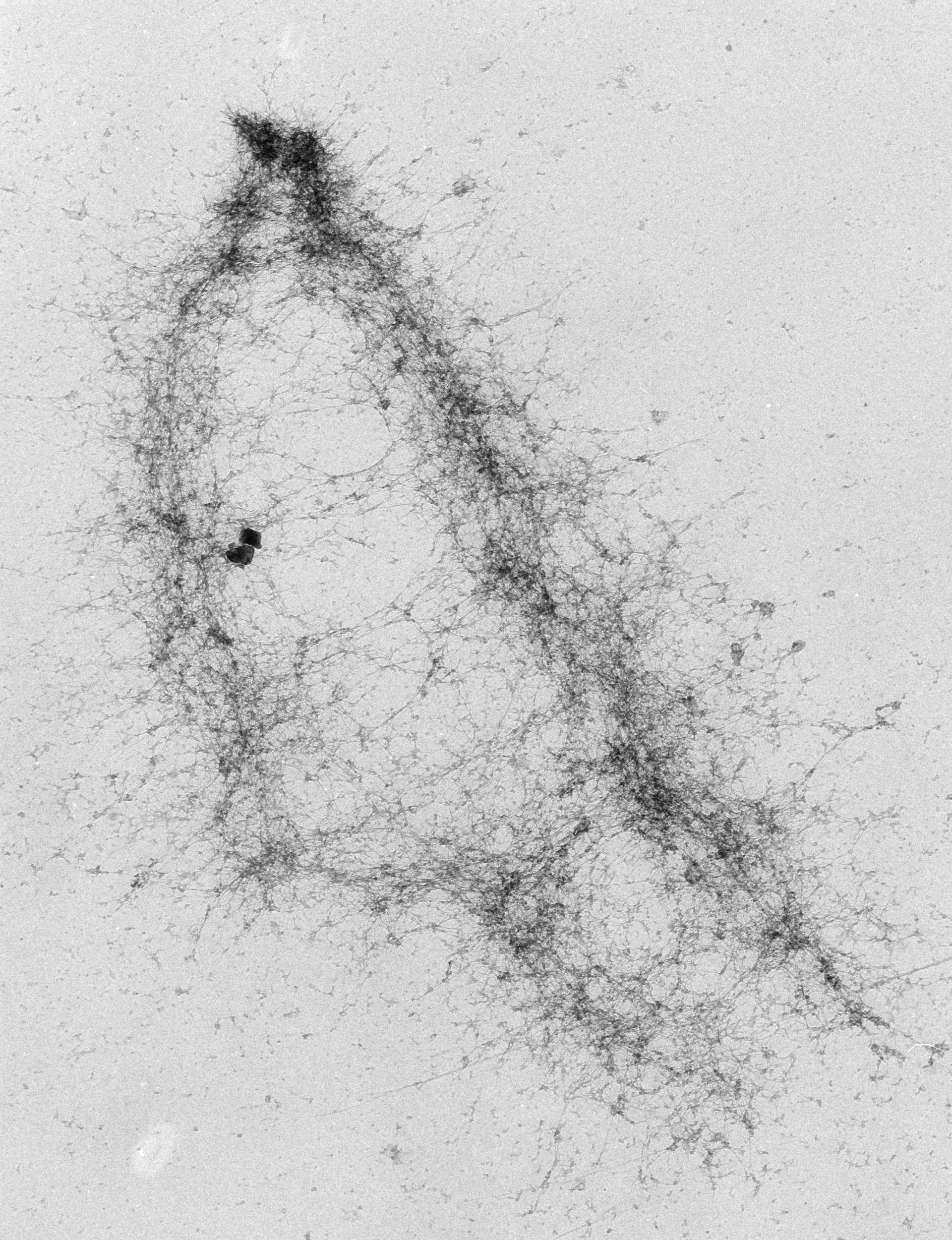 Mus musculus (Nuclear chromosome) - CIL:40687
