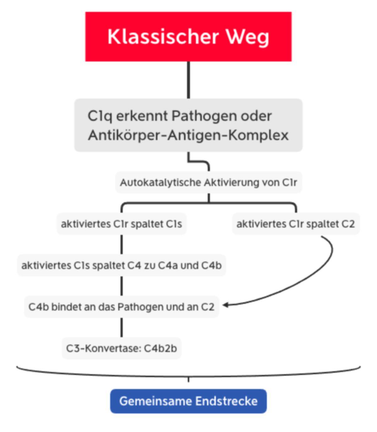 Komplementsystem - Klassischer Weg