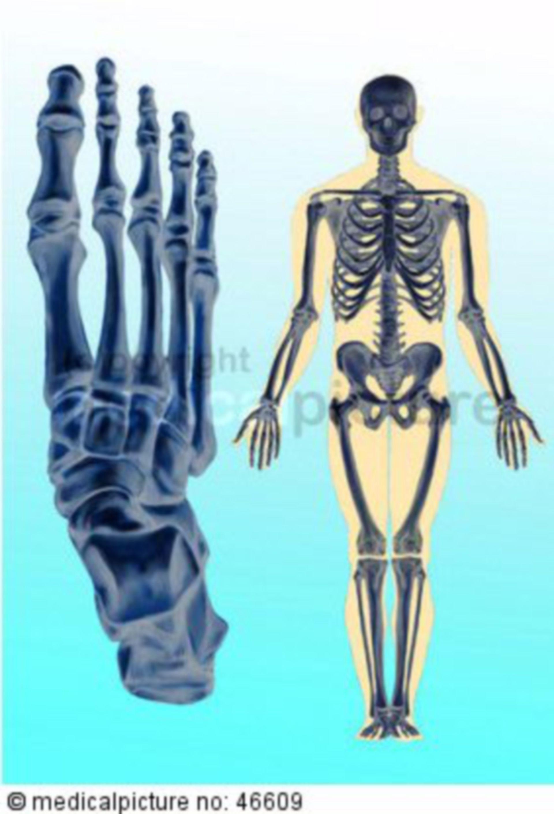 Menschliches Ganzkörper- und Fußskelett