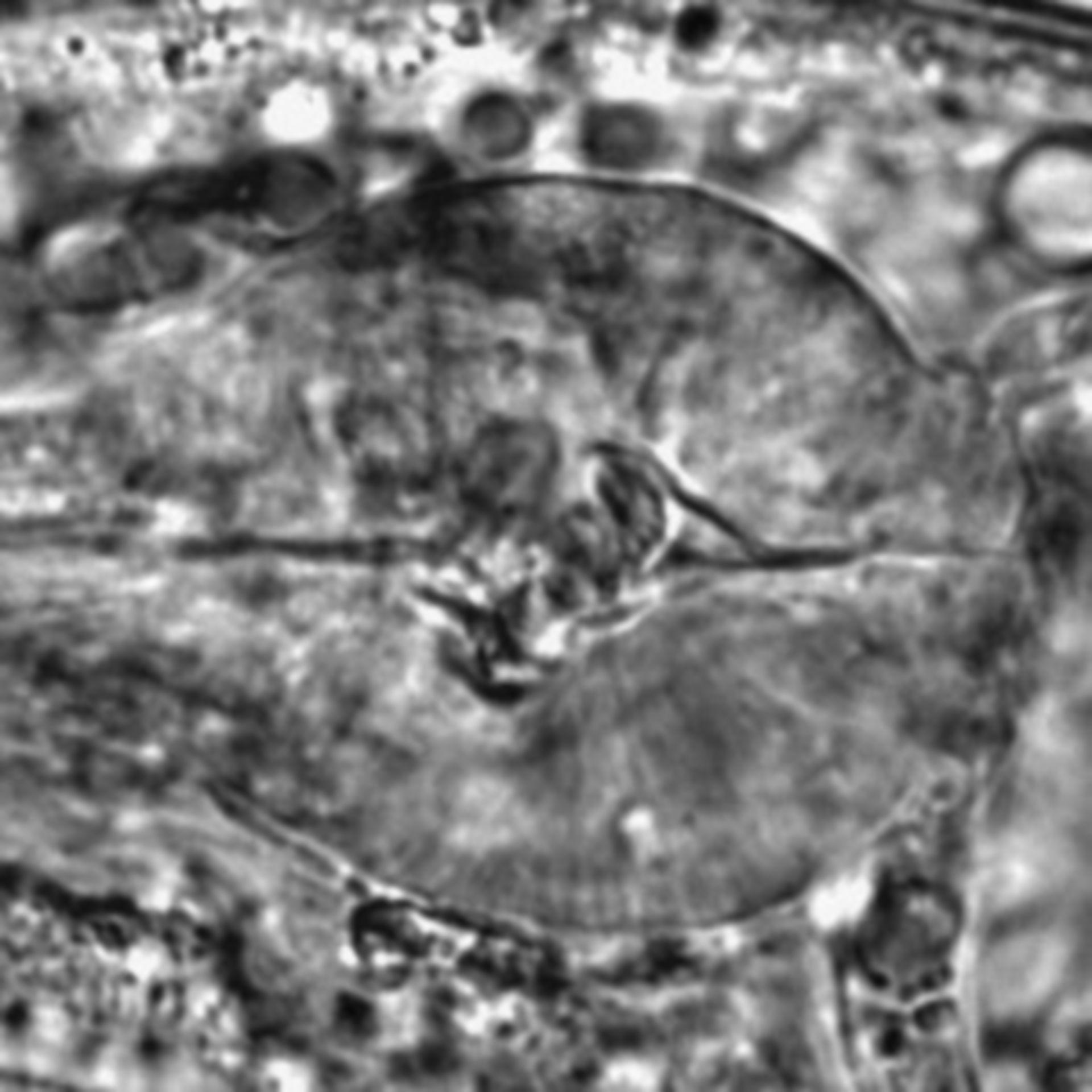 Caenorhabditis elegans - CIL:2739