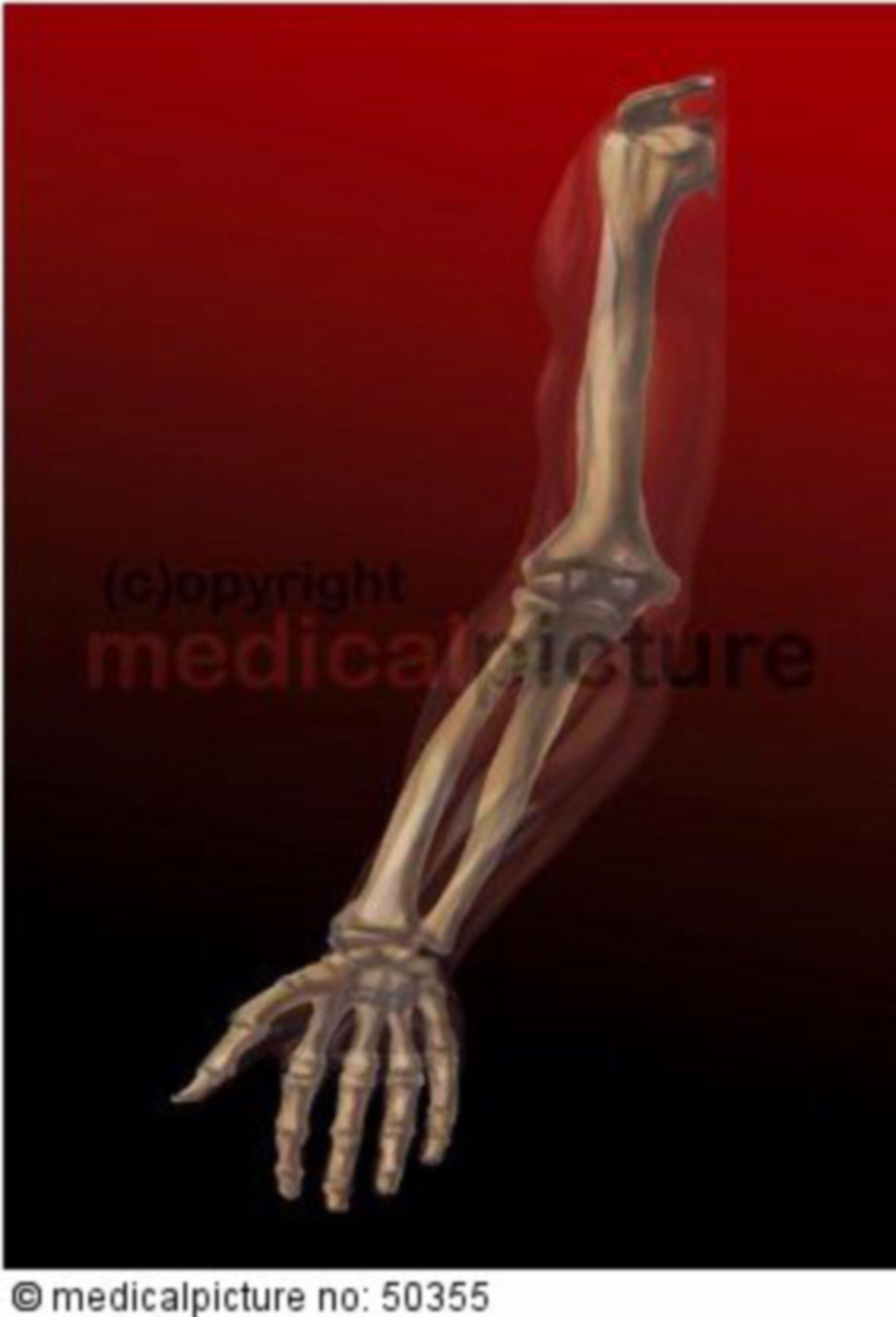 Arm- und Handknochen