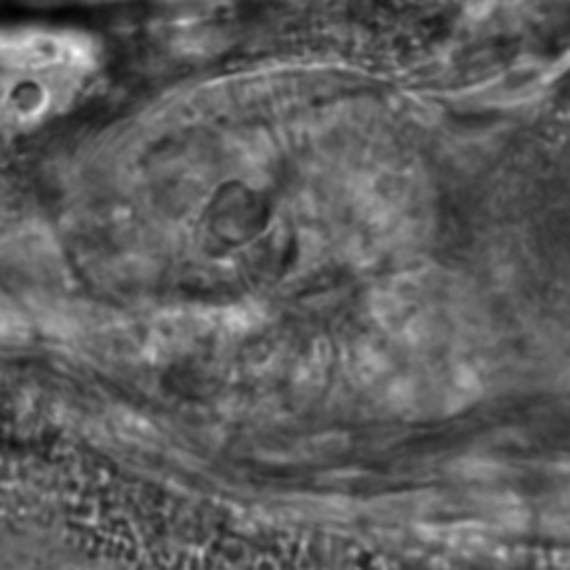 Caenorhabditis elegans - CIL:1936