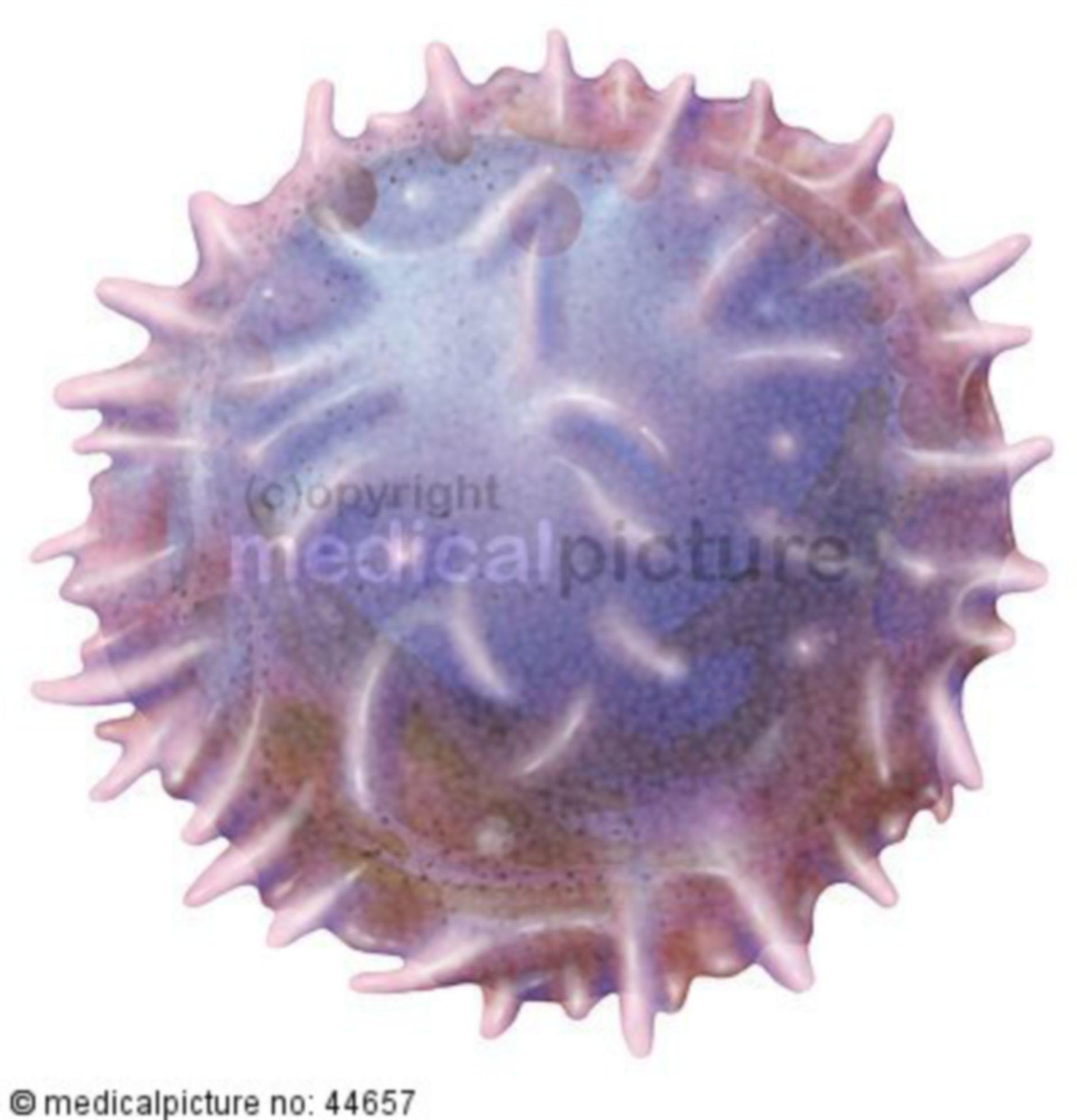 T-lymphocyte