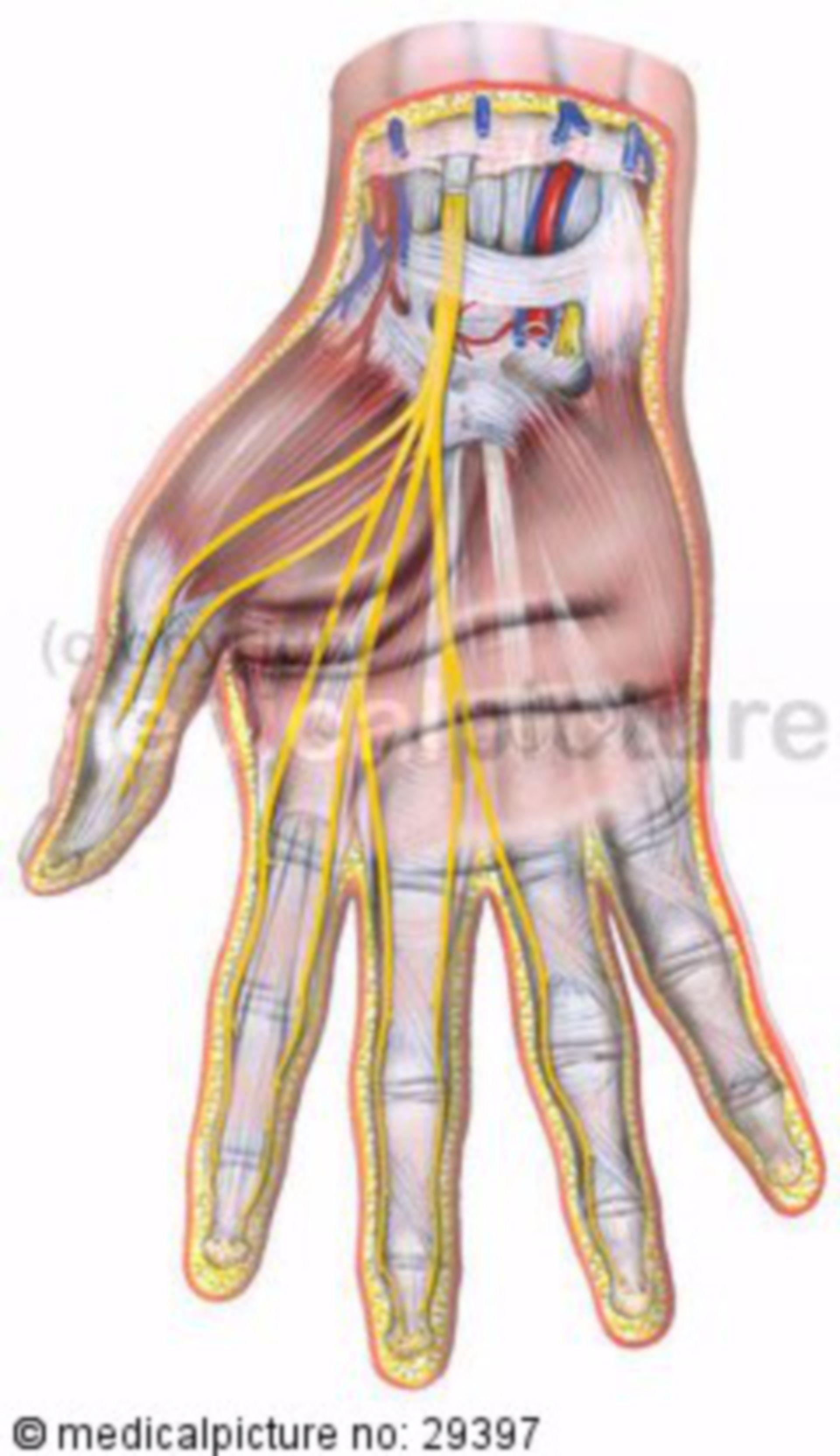Nervo mediano della mano destra