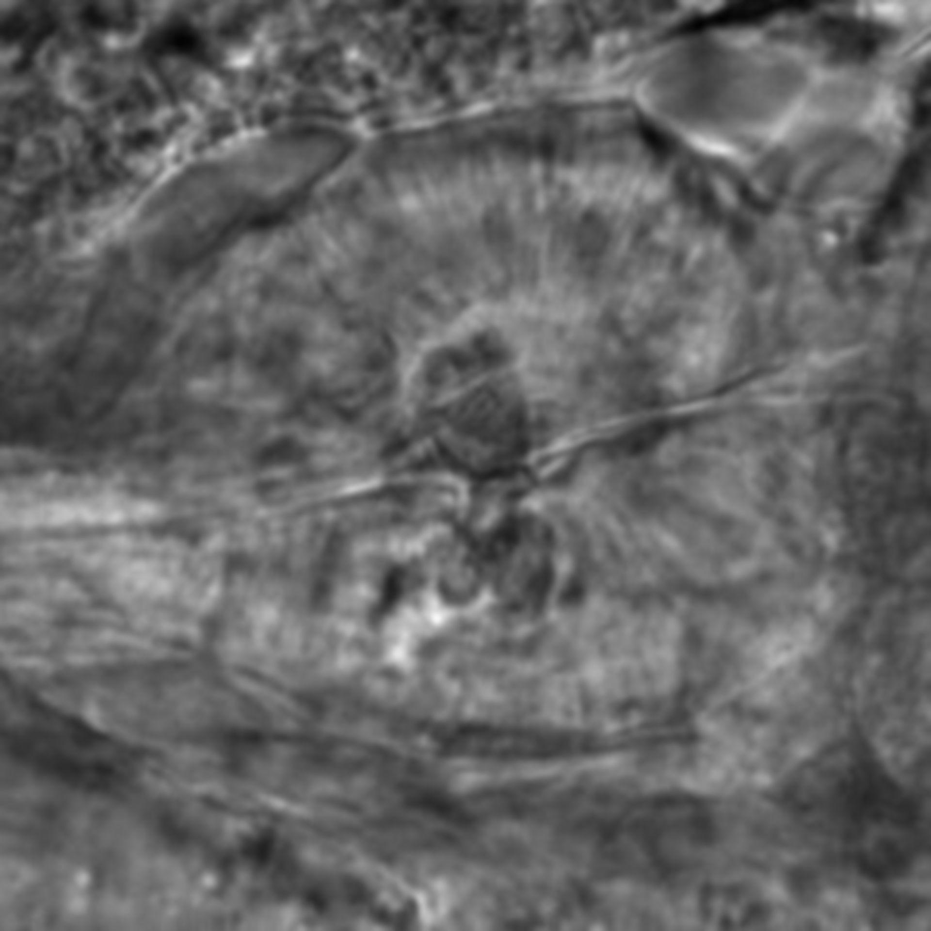 Caenorhabditis elegans - CIL:1995