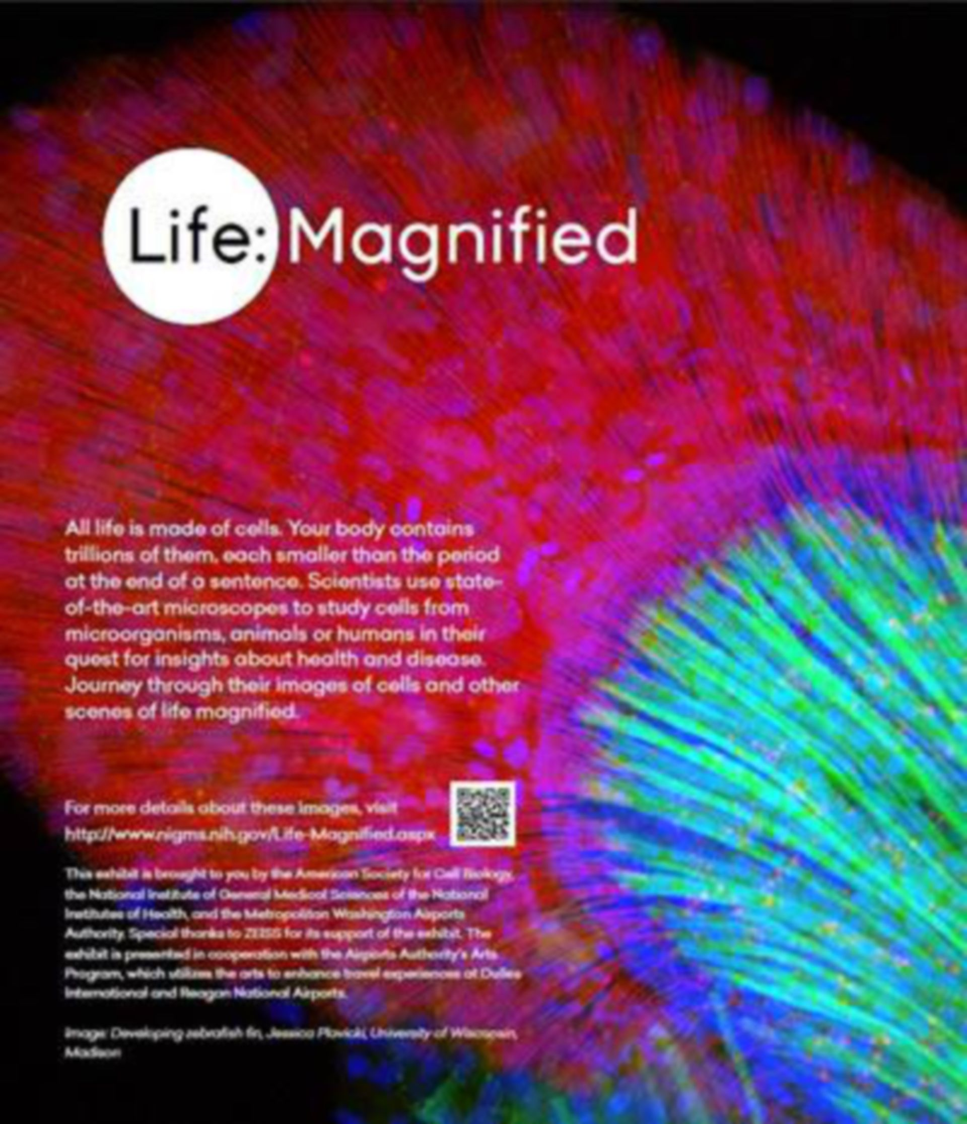 Life Magnified
