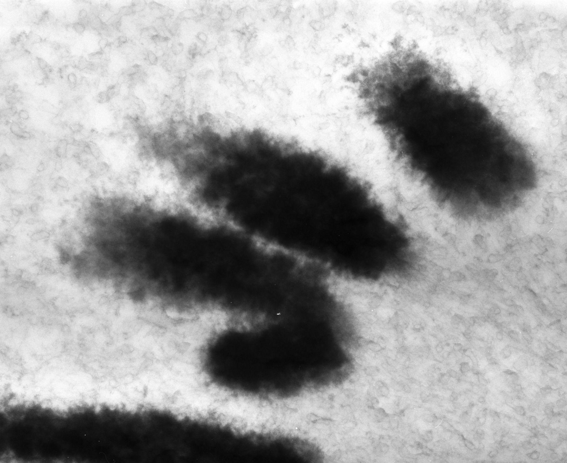 Haemanthus katharinae (Nuclear chromosome) - CIL:11910