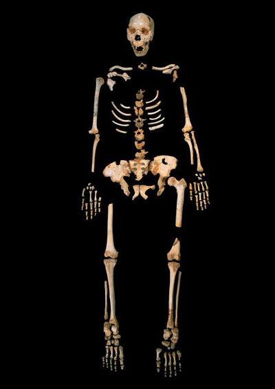 Skelett eines Homo heidelbergensis aus Sima de los Huesos, einer einzigartigen Höhle in Nordspanien.