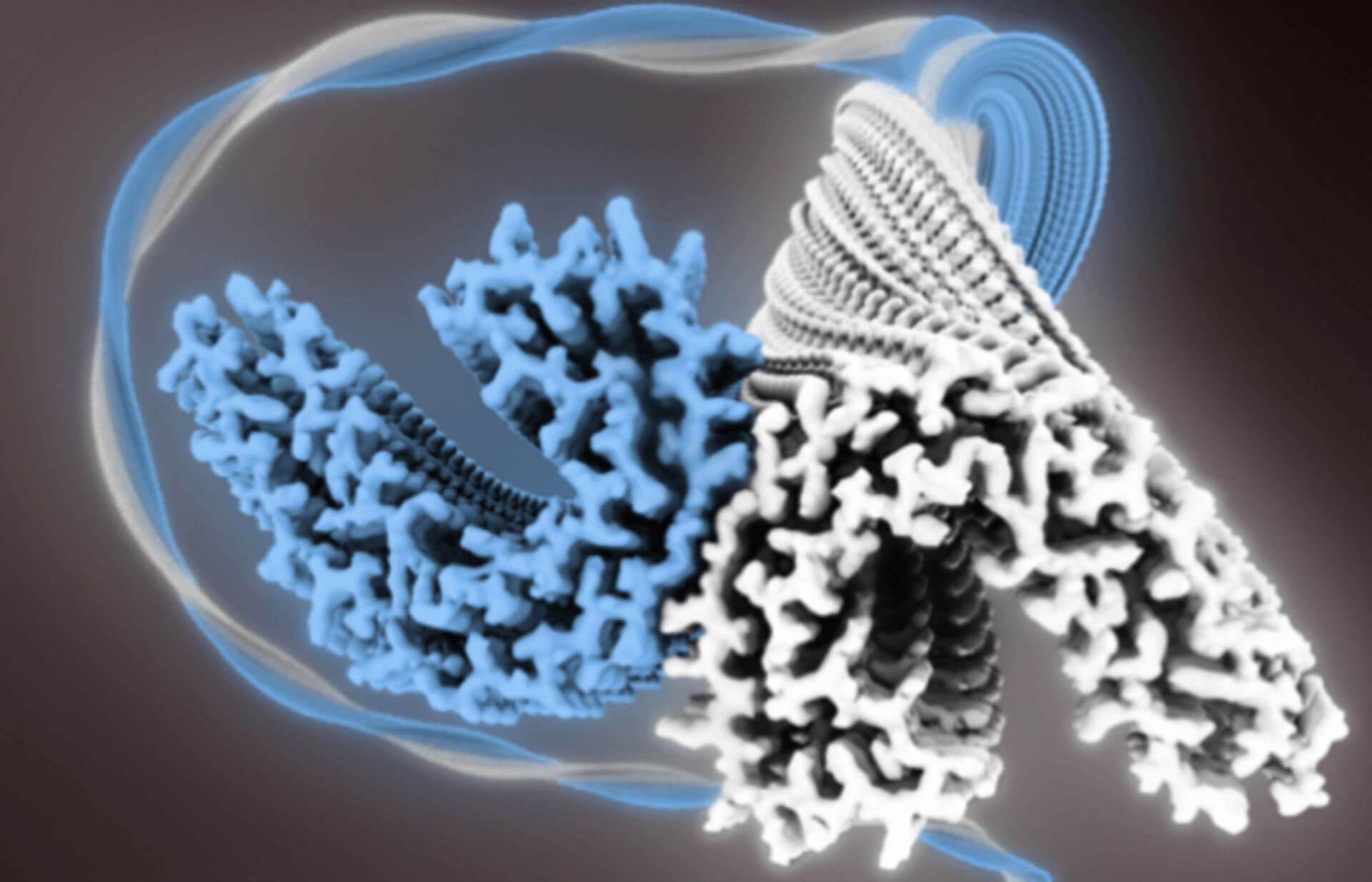 Cryo-EM Structure Determination
