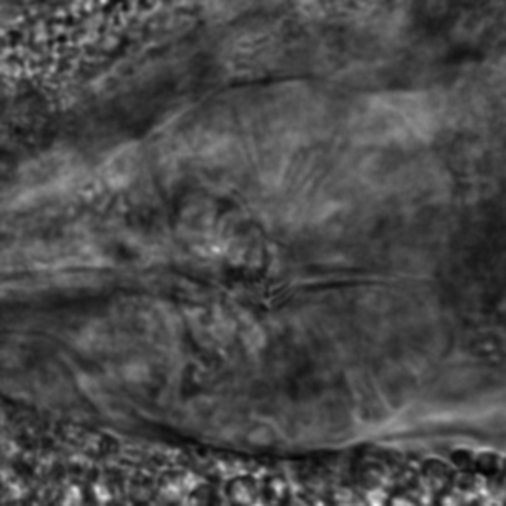 Caenorhabditis elegans - CIL:2307