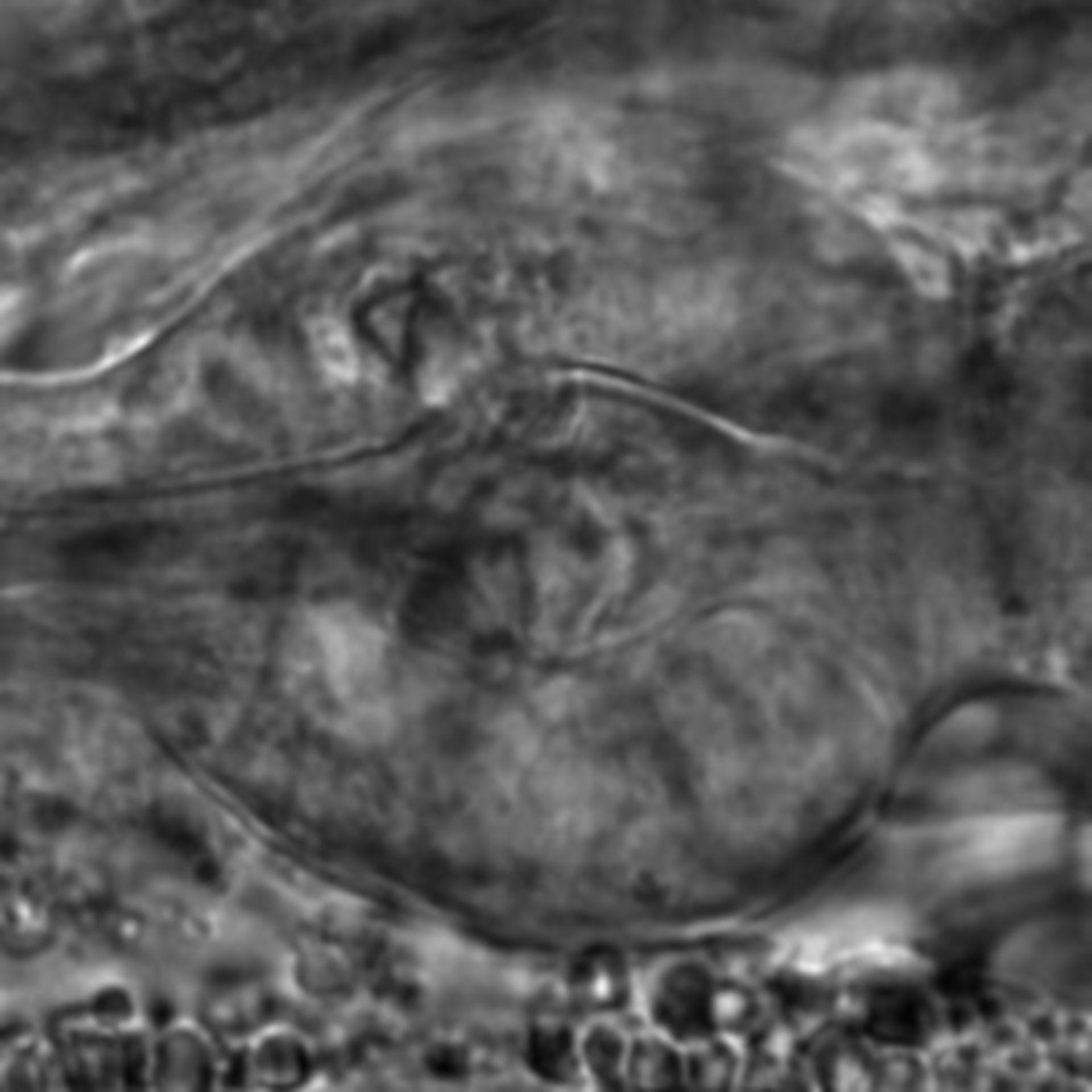 Caenorhabditis elegans - CIL:2267