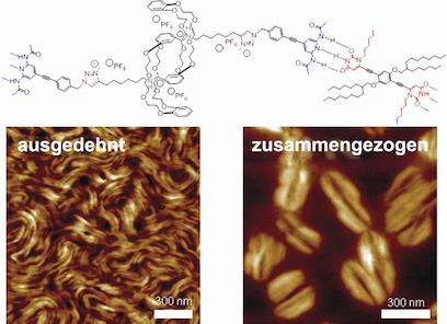 Elektronenmikroskopische Aufnahmen von supramolekularen muskelartigen Fasern im kontrahierten und im gedehnten Zustand. © Wiley-VCH