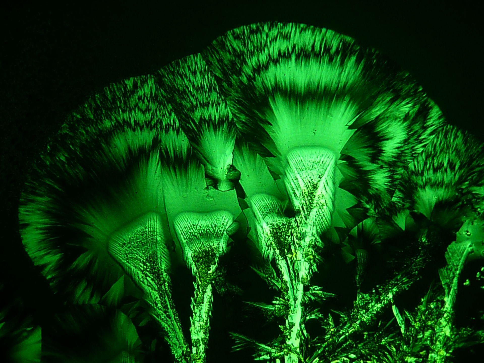 Potassium guaiacolsulphonicum