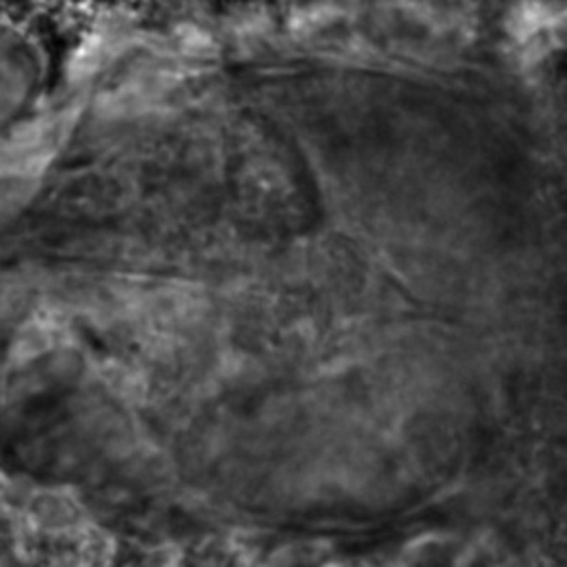 Caenorhabditis elegans - CIL:2700