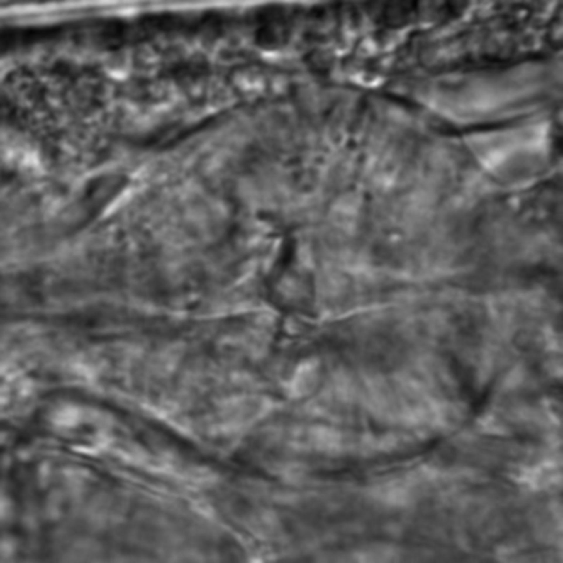 Caenorhabditis elegans - CIL:2210