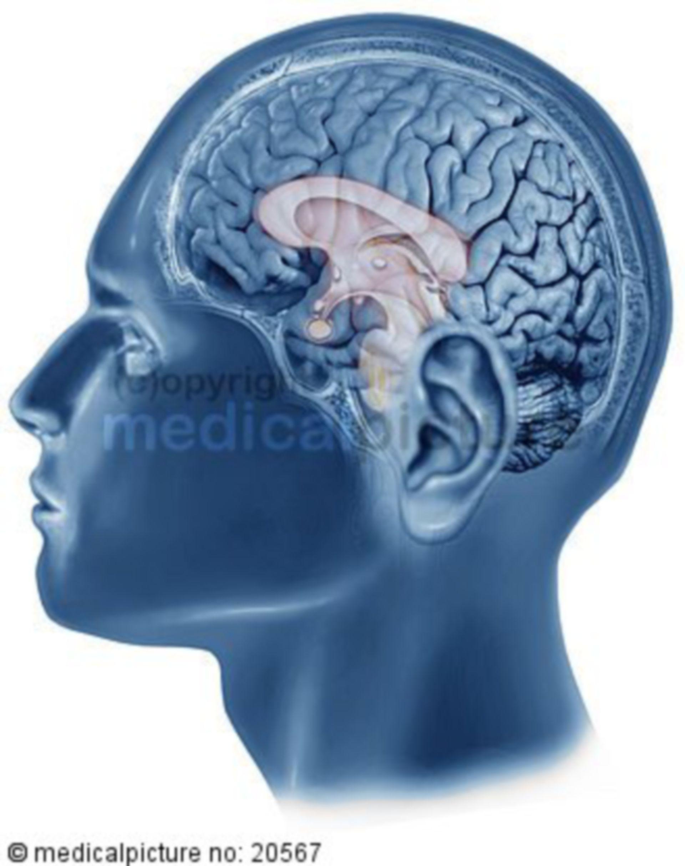 Kopf Gehirn brain head