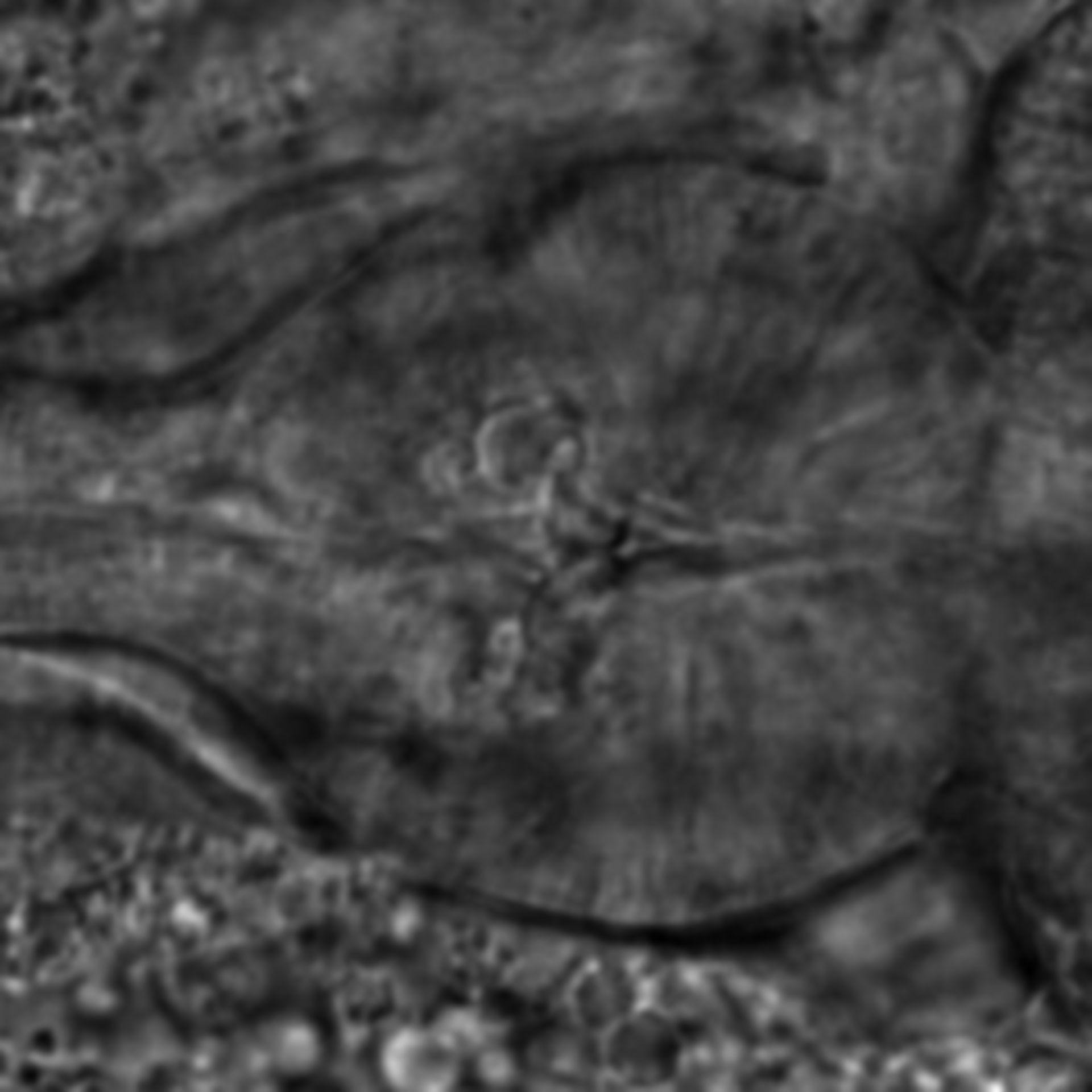 Caenorhabditis elegans - CIL:2206