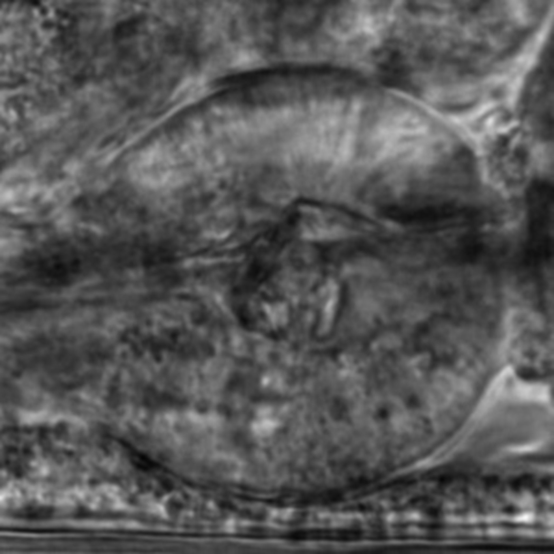 Caenorhabditis elegans - CIL:2775
