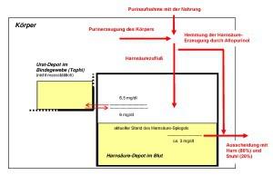 Modell des Purin-Harnsäure-Stoffwechsels des Menschen, Credit: LMU5967 - Eigenes Werk, CC BY-SA 3.0,