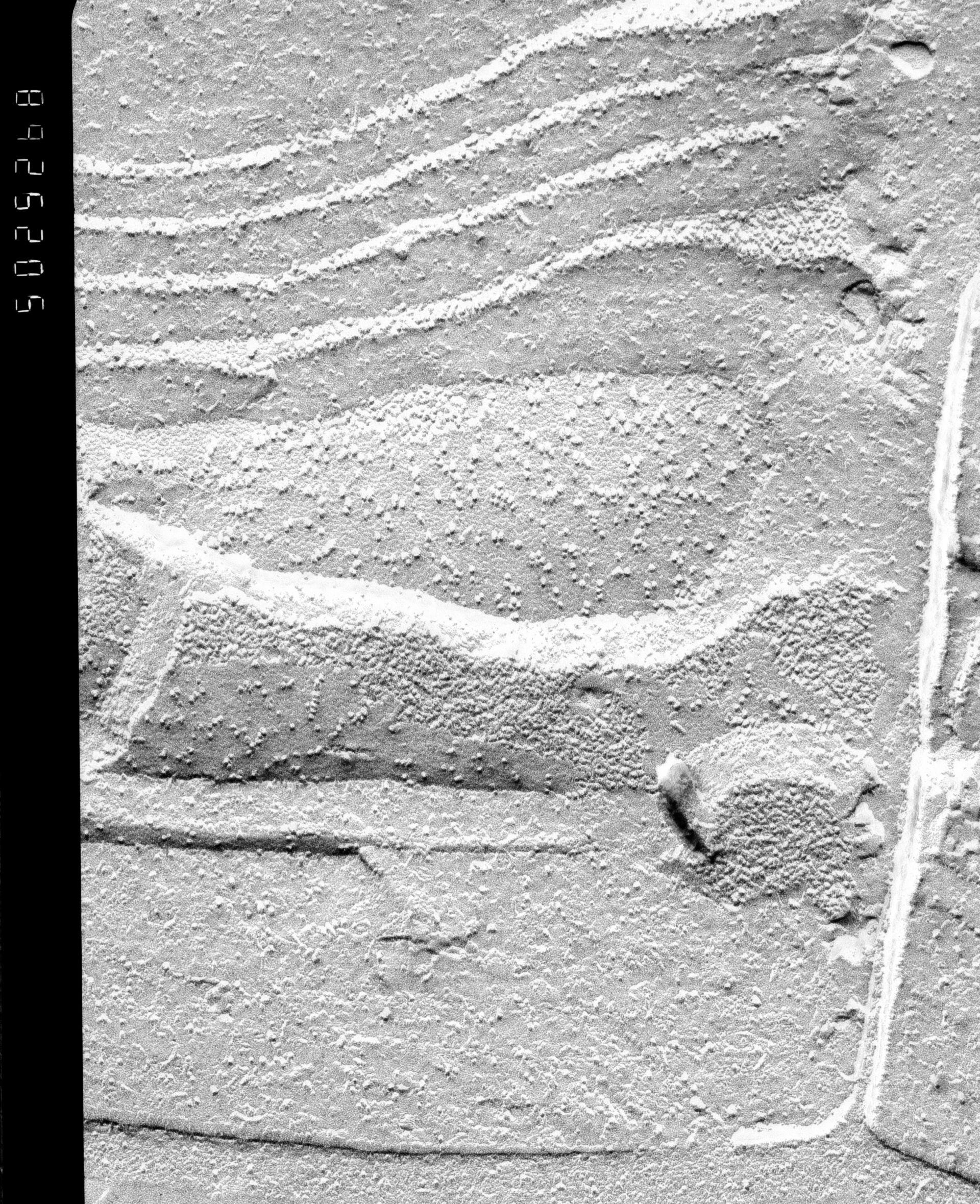 Oscillatoria tenuis (Thylakoid) - CIL:16226