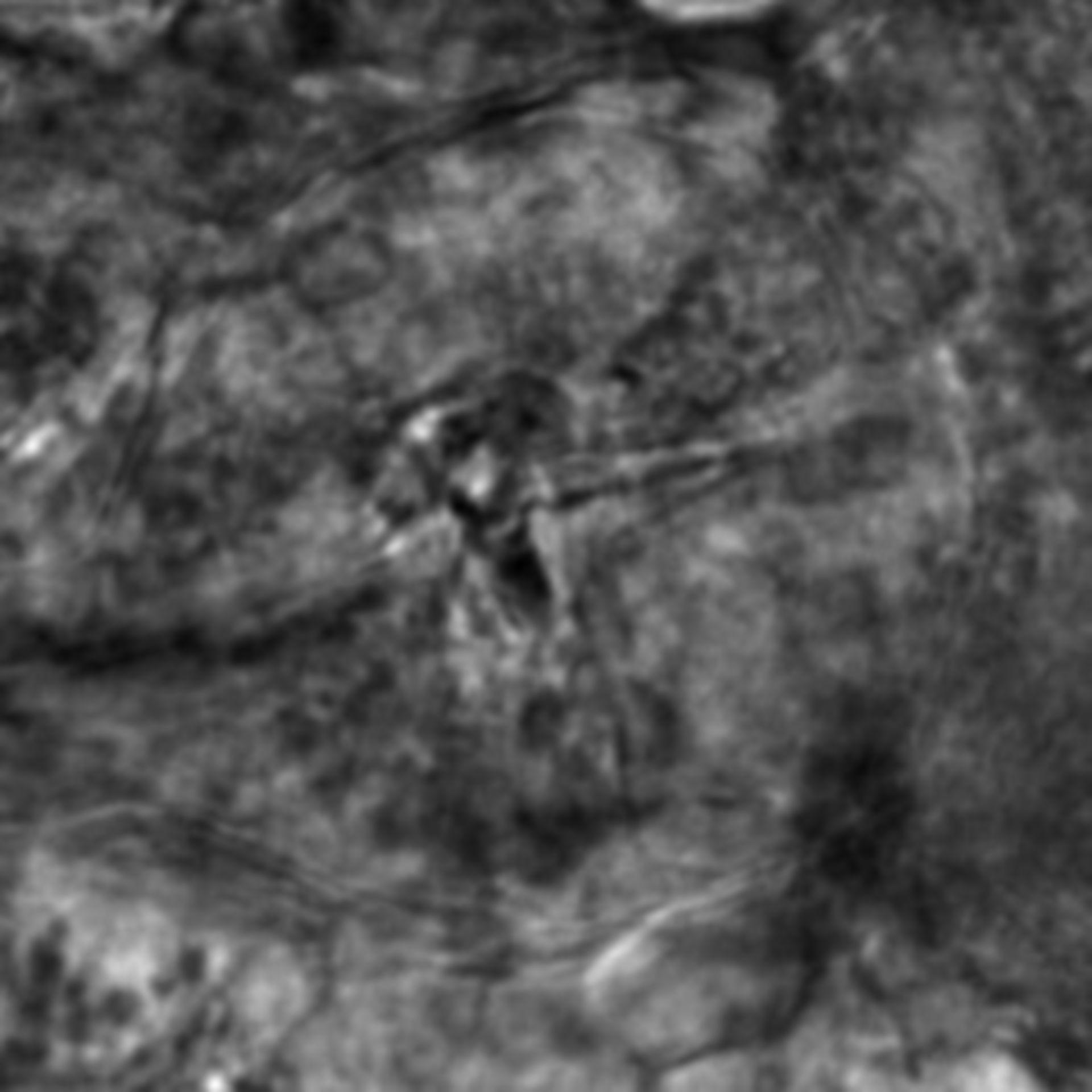 Caenorhabditis elegans - CIL:2298