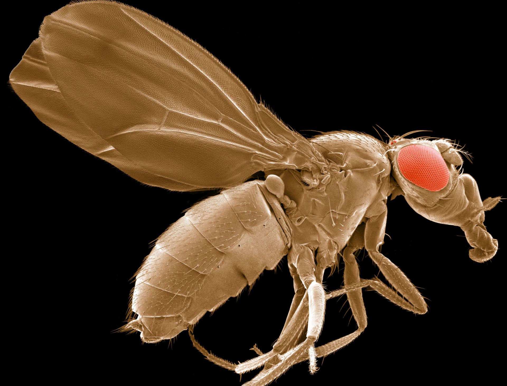 Flies, Zebrafish, and Nematodes, Oh My! CIL:39726 - http://cellimagelibrary.org/images/39726