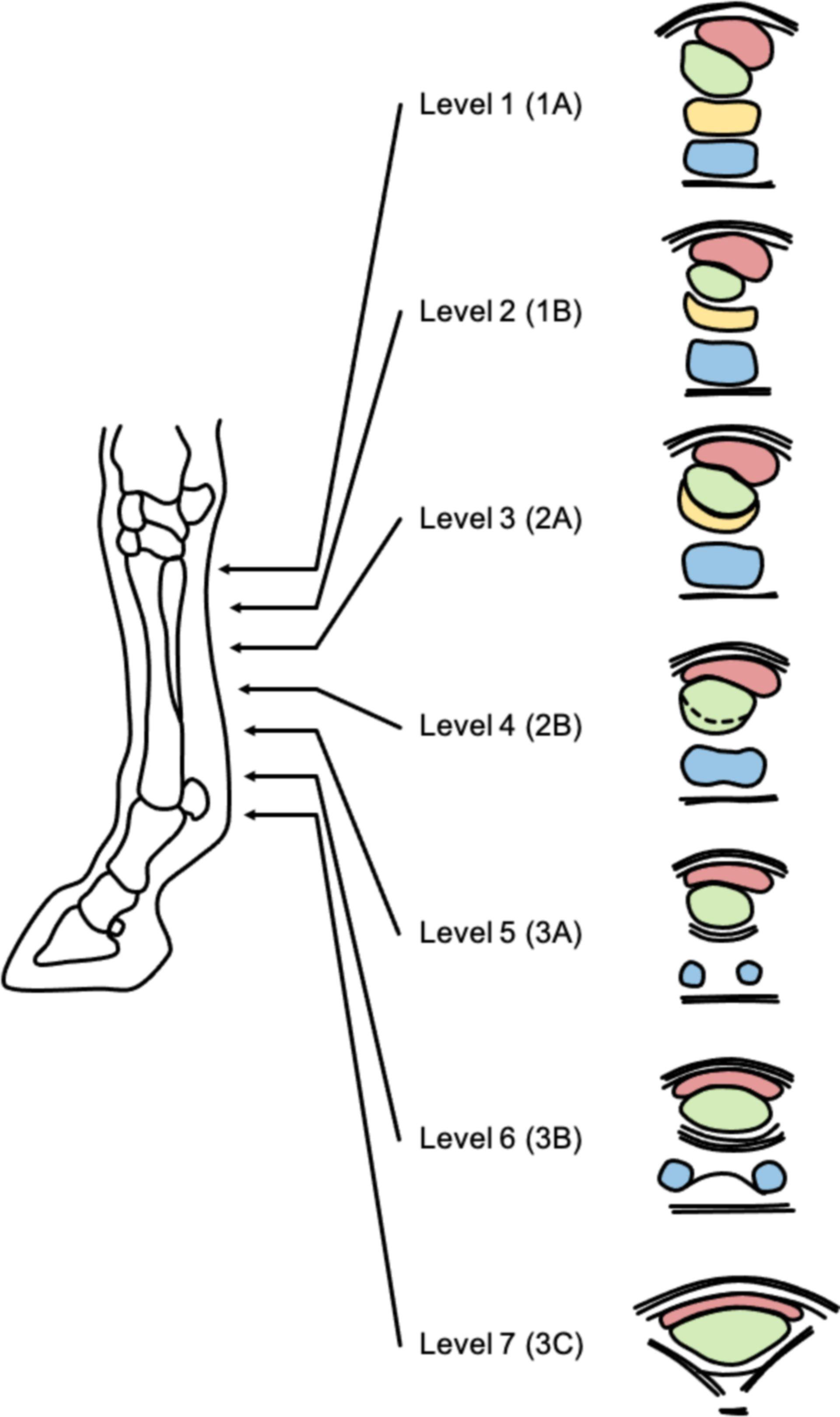Ultraschalldiagnostik (Sehnen)