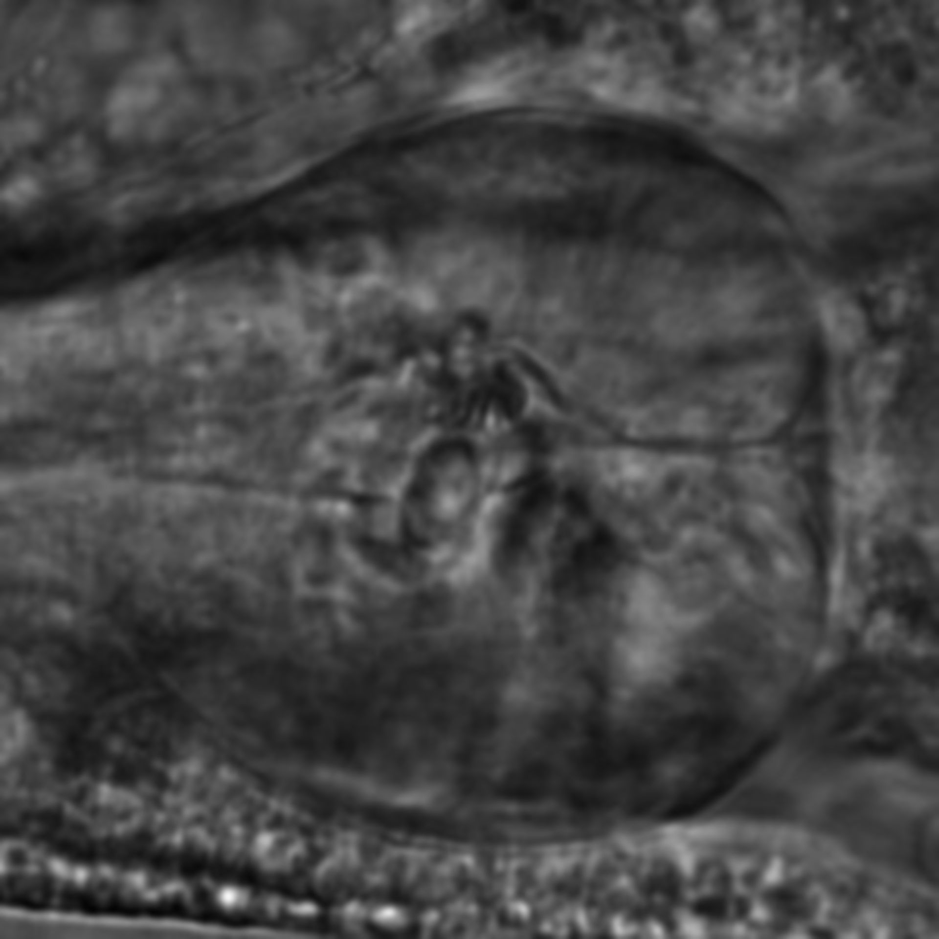 Caenorhabditis elegans - CIL:2770