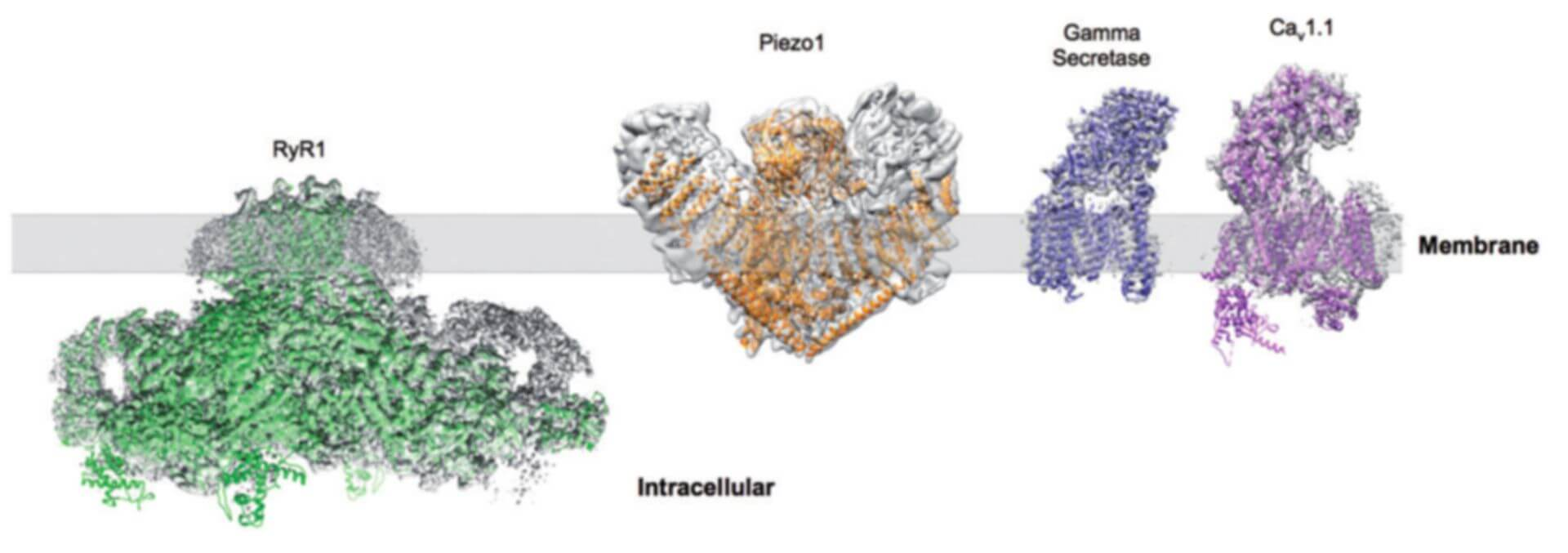 Cryo-EM for Membrane Protein