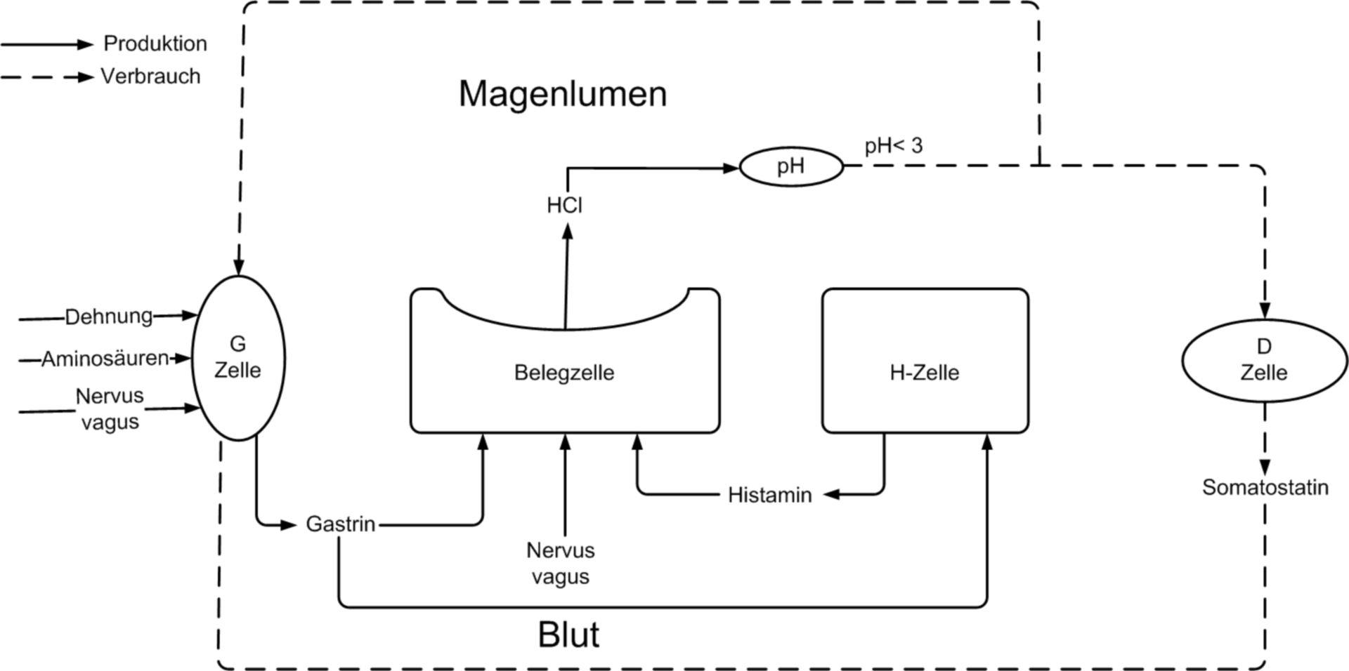 Regolazione acido gastrico